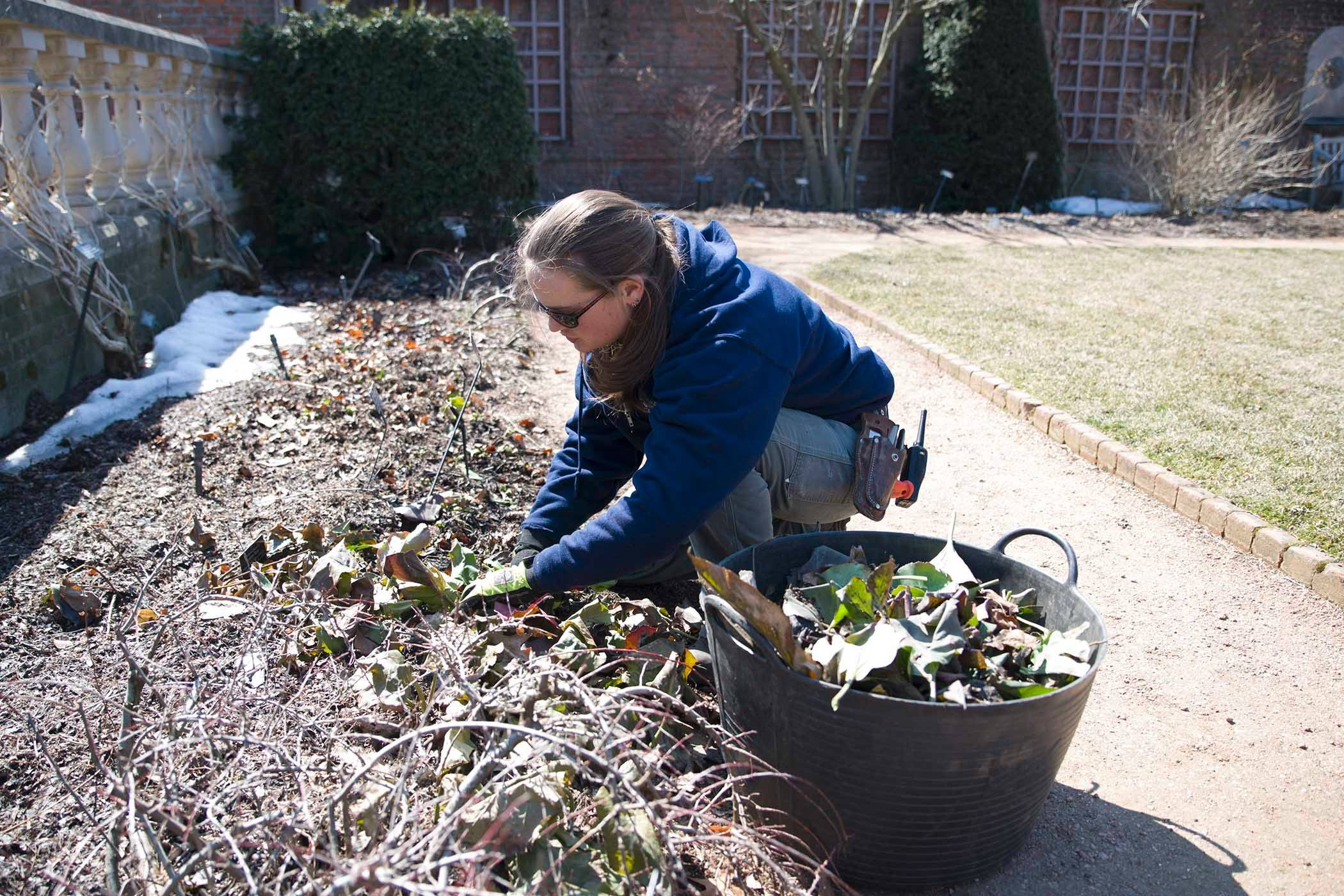 While it still is not too late for garden cleanup, you must take care not to damage any new perennial growth.