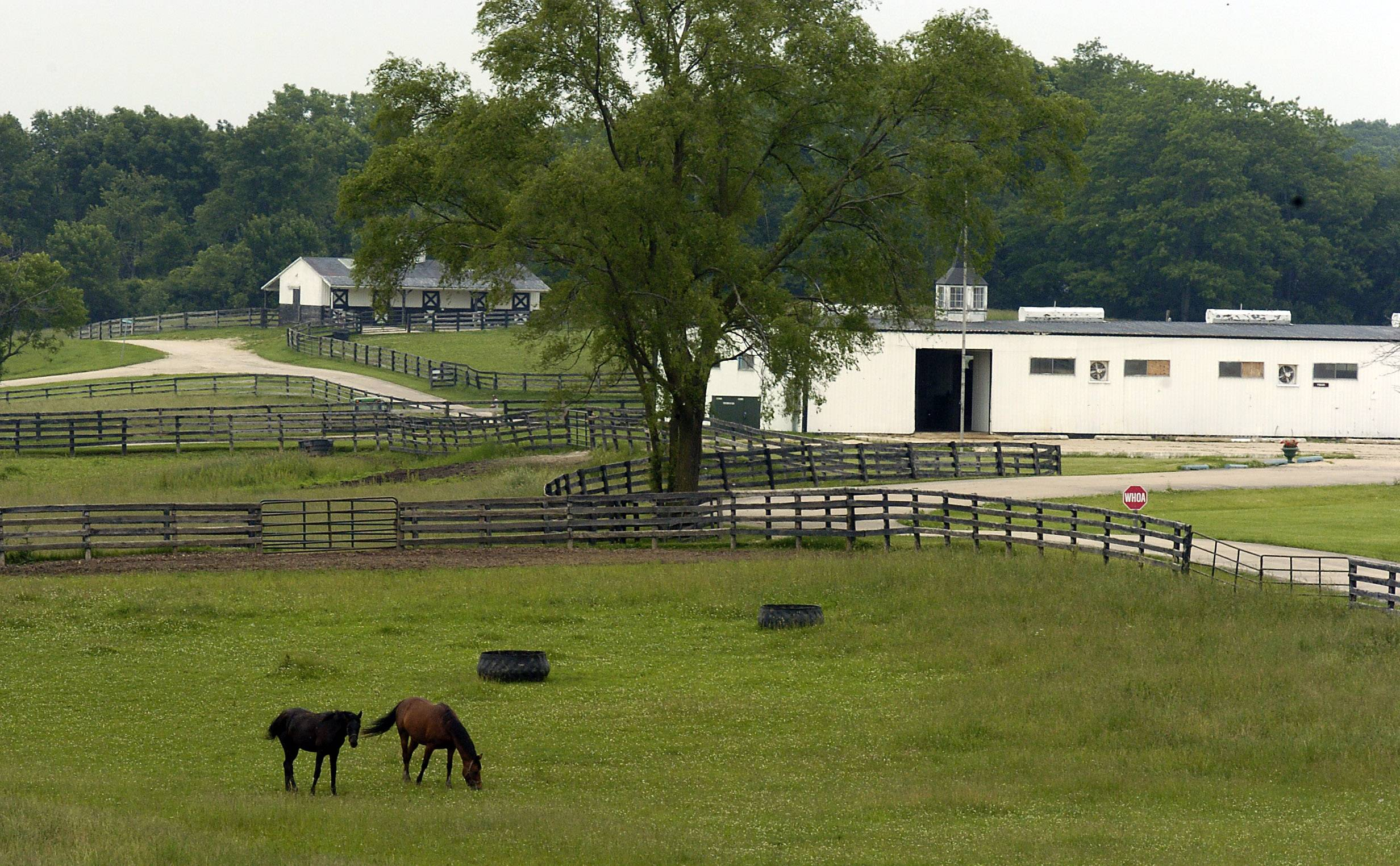 Horses roam the pastures of the 400-acre Horizon Farms in Barrington Hills.