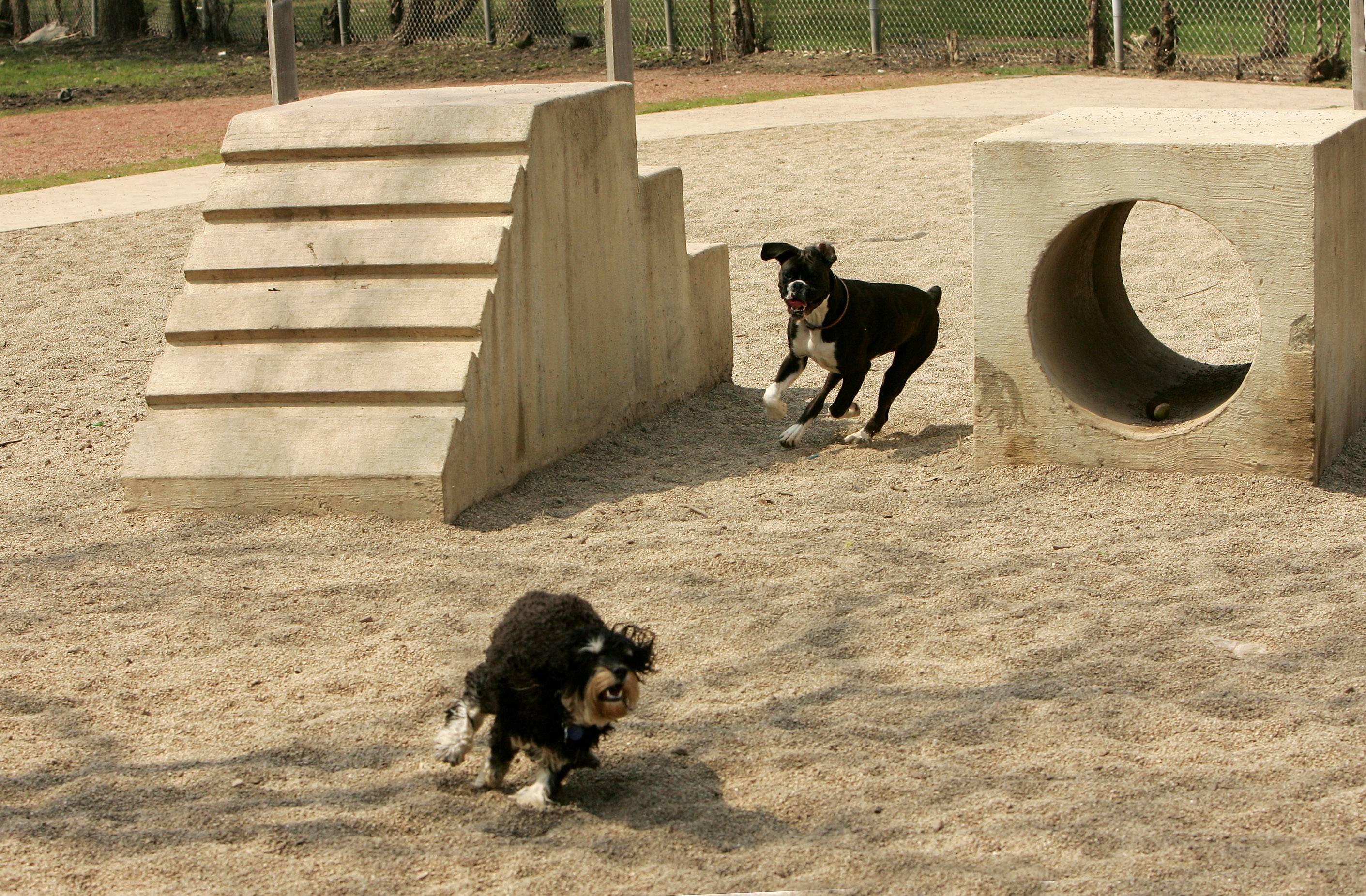 Dogs get a workout on the exercise equipment at the Jaycee Memorial Park dog exercise area in Deerfield.