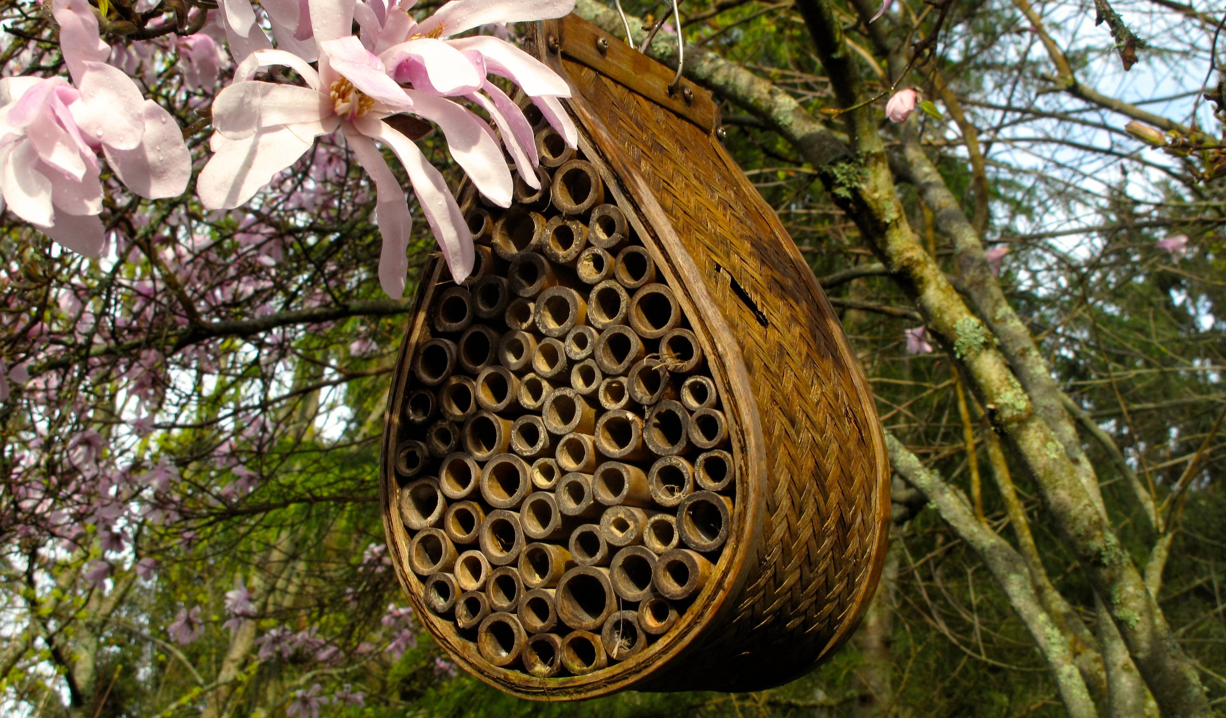 To create an inviting habitat for leaf cutter and mason bees, add nesting sites to your yard to maximize the production of native bees.