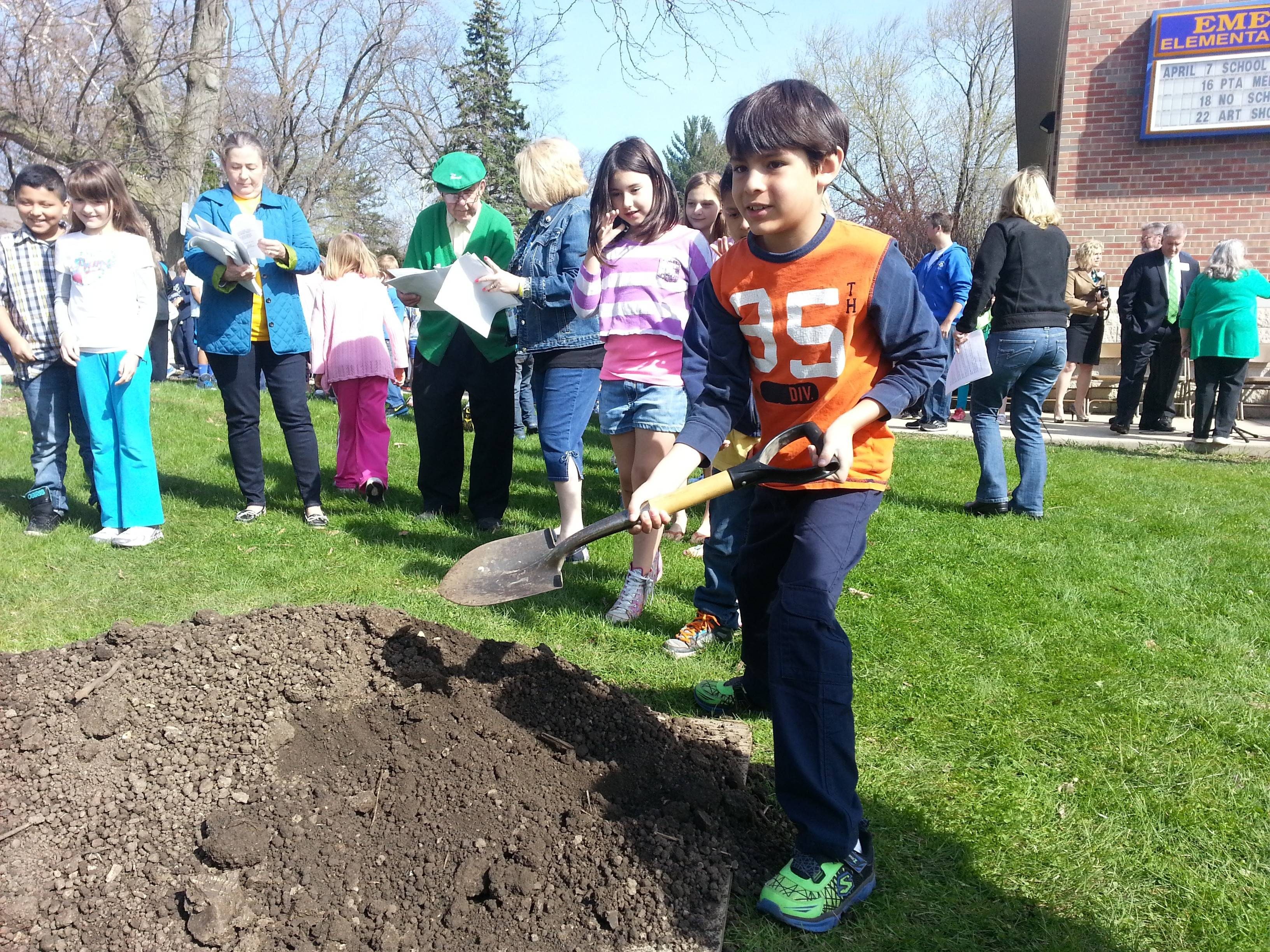 A student at Emerson Elementary School in Wheaton helps plant a white oak tree Friday in celebration of Arbor Day.