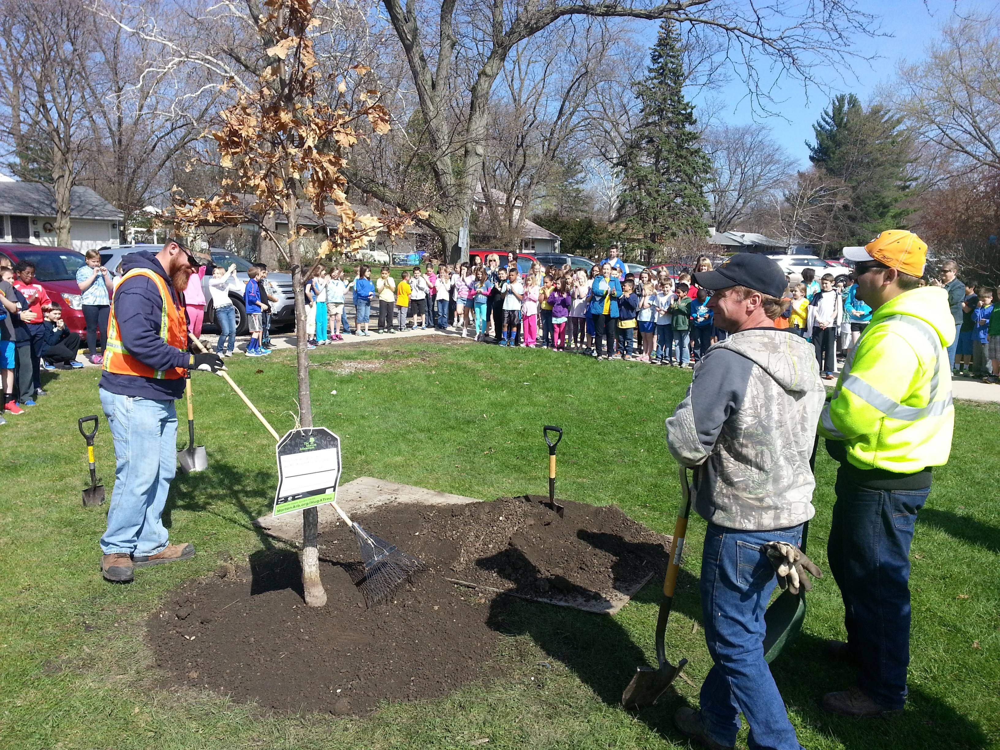 Workers from the Wheaton forestry division help plant a white oak tree at Emerson Elementary School in Wheaton Friday in celebration of Arbor Day.