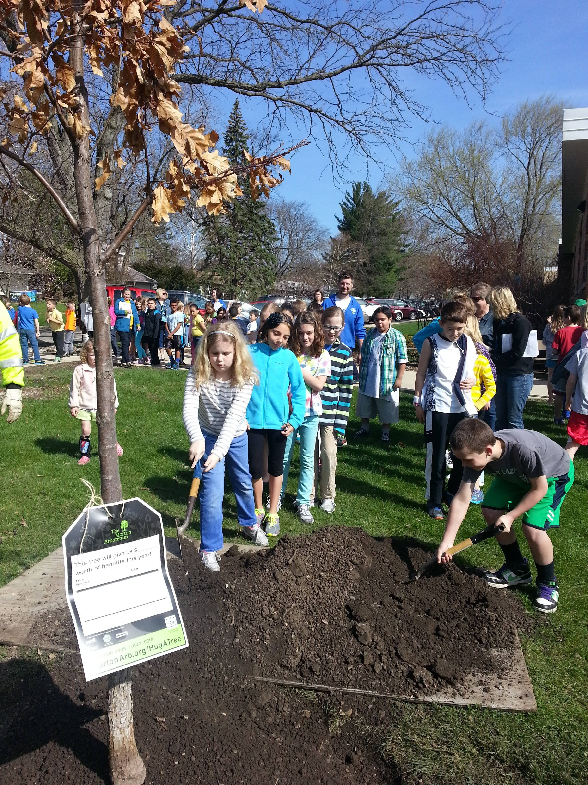 Students at Emerson Elementary School in Wheaton help plant a white oak tree Friday in celebration of Arbor Day.