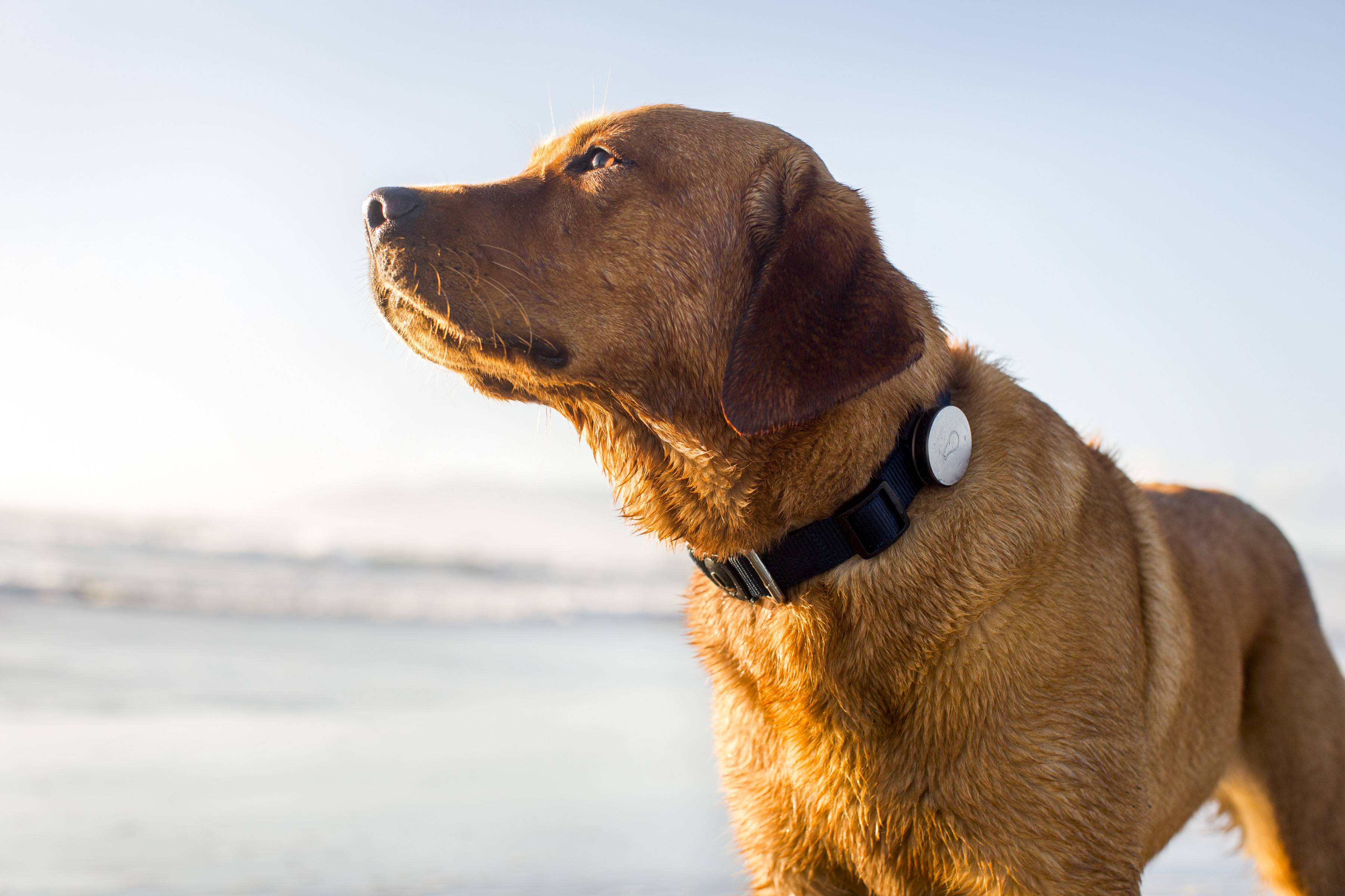 The Whistle lets pet owners track how much exercise -- or sleep -- their four-legged friends are getting.