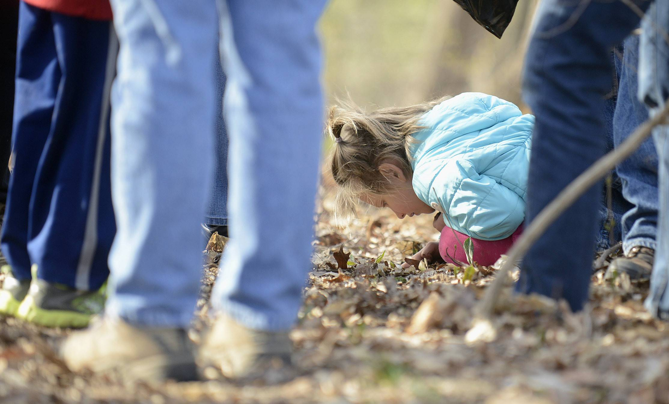 While hikers discuss types of trees and fungi, Chloe Agustsson, 6, of St. Charles, explores the forest floor during an Earth Day nature walk at LeRoy Oakes Forest Preserve in St. Charles on Tuesday. The warm weather drew about 60 people, who were divided into three groups to explore the woods and prairie areas of the preserve.