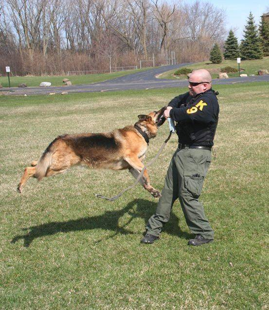 Terry Kaminski demonstrates Nadja's training. Nadja is retired from the Lake County Major Crimes Task Force.