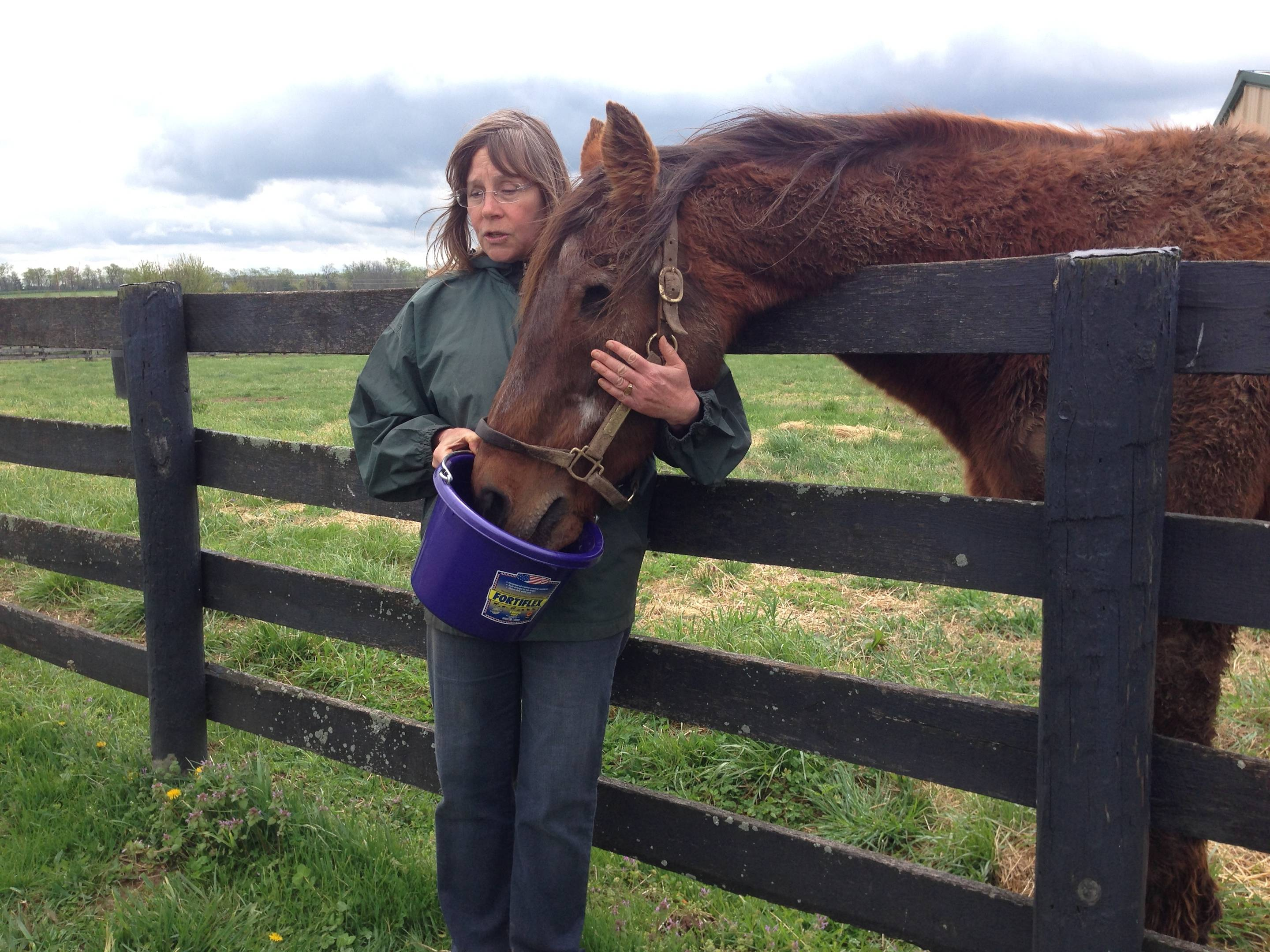 Beth Shannon, a volunteer guide at Old Friends farm in Georgetown, Ky., feeds Ogygian some carrots on April 25, 2014. Ogygian, a 31-year-old former champion racehorse, was brought back from Japan in 2005.