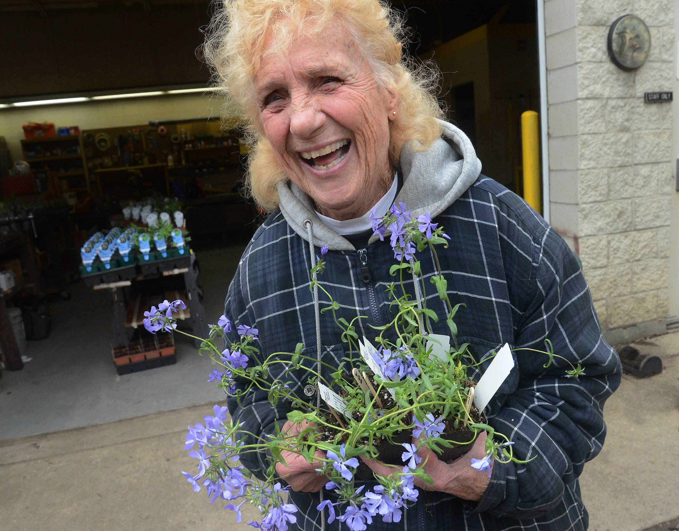 Longtime club member Delores Potter grabs a handful of plants as the Schaumburg Community Garden Club sets up for its big native plant sale this weekend.
