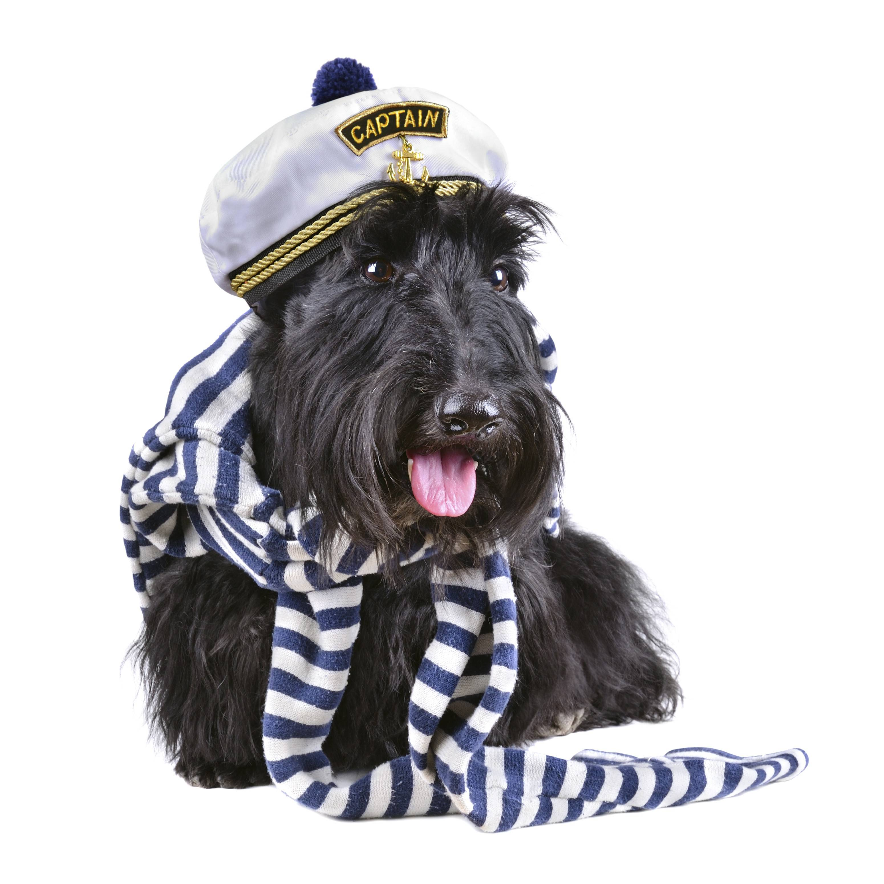 Dogs can dress in costume for the Dog Day Parade on Saturday, May 10, a the Gorton Community Center, 400 E. Illinois Road, Lake Forest.