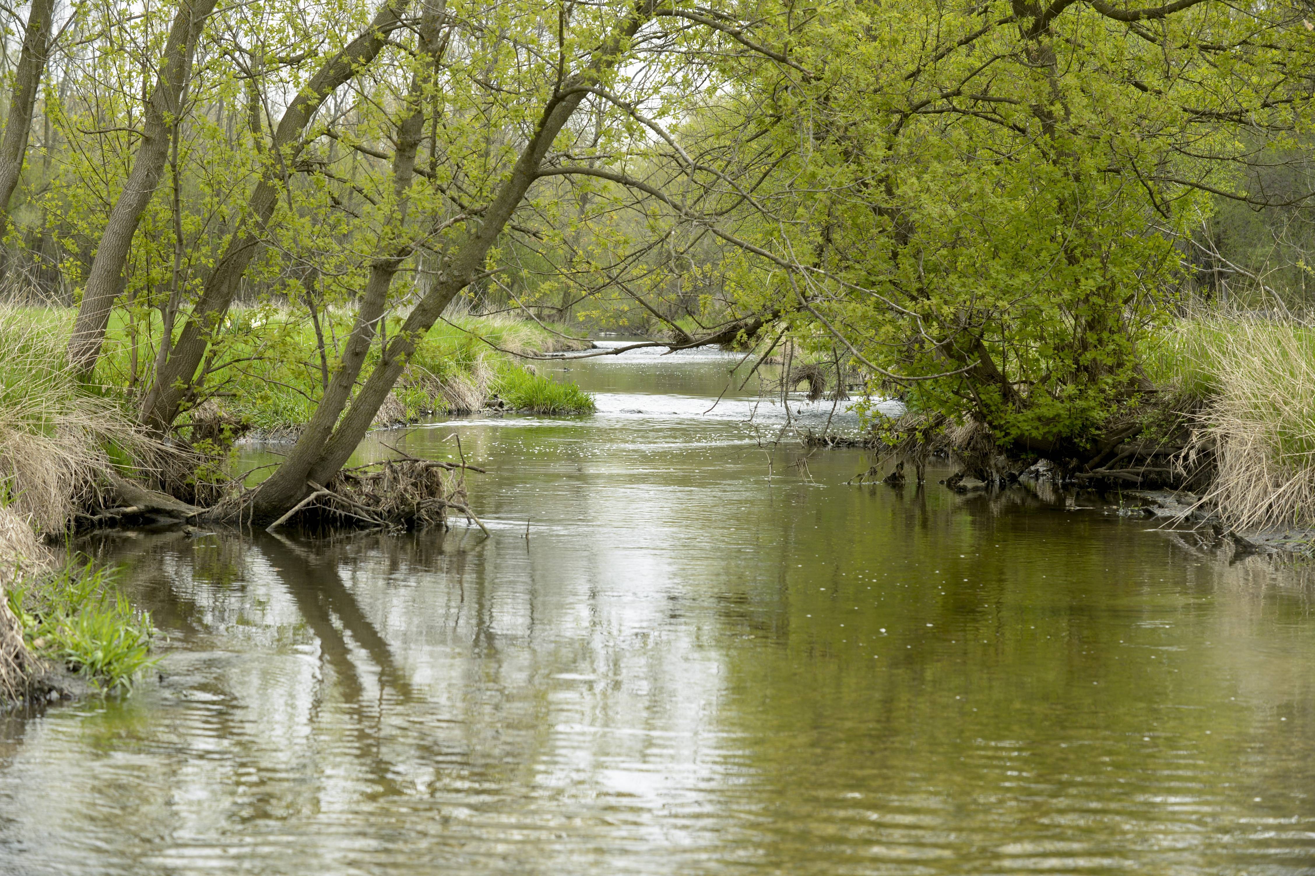 A planned restoration of Spring Brook Creek in St. James Farm Forest Preserve near Warrenville is expected to begin this year and be completed in 2015.