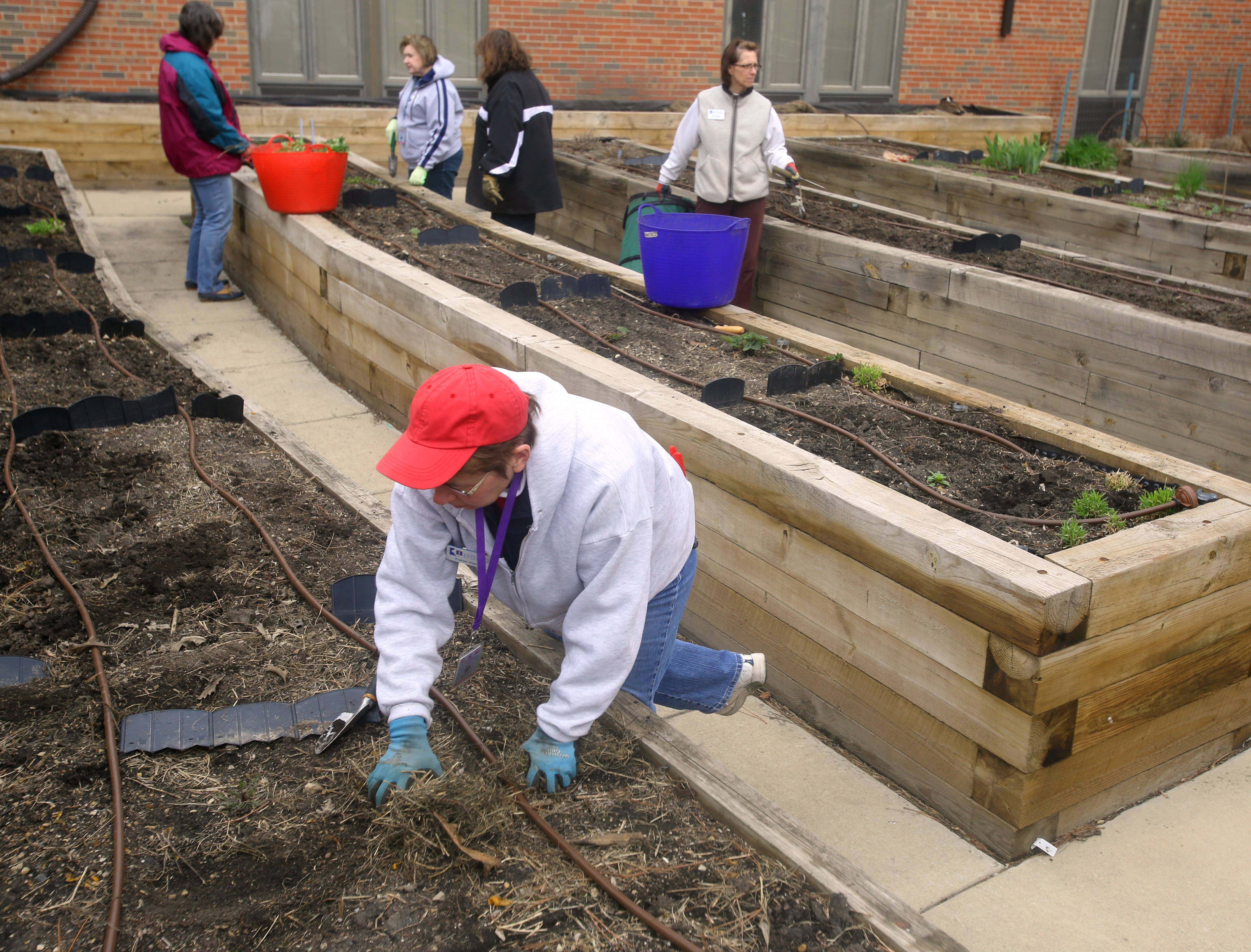 Karen Pachyn of Elmhurst, foreground, along with other University of Illinois master gardeners, prepares raised garden beds for planting at the DuPage Convalescent Center in Wheaton.