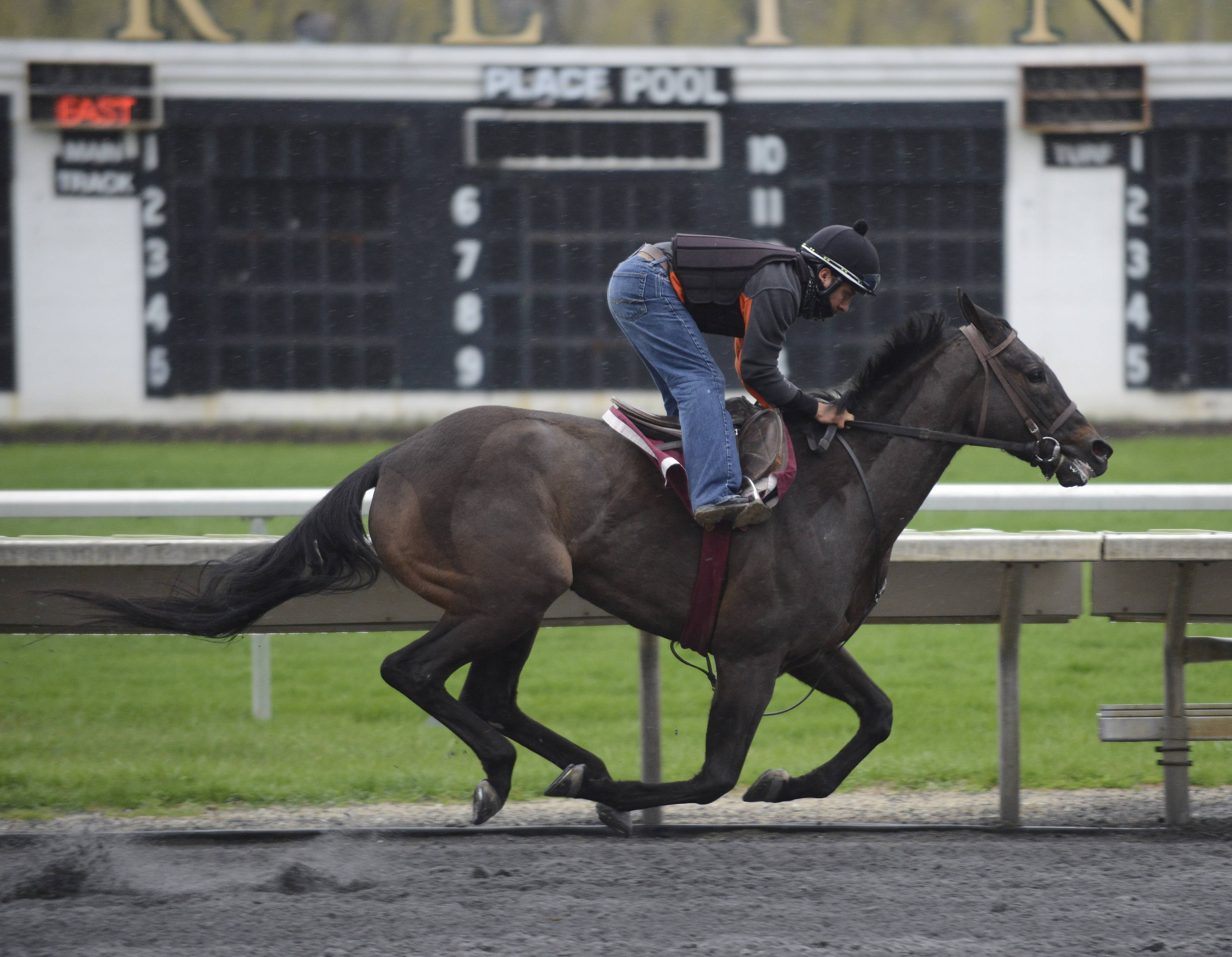 A rider and horse runs during the morning workout at Arlington International Racecourse in Arlington Heights Thursday.