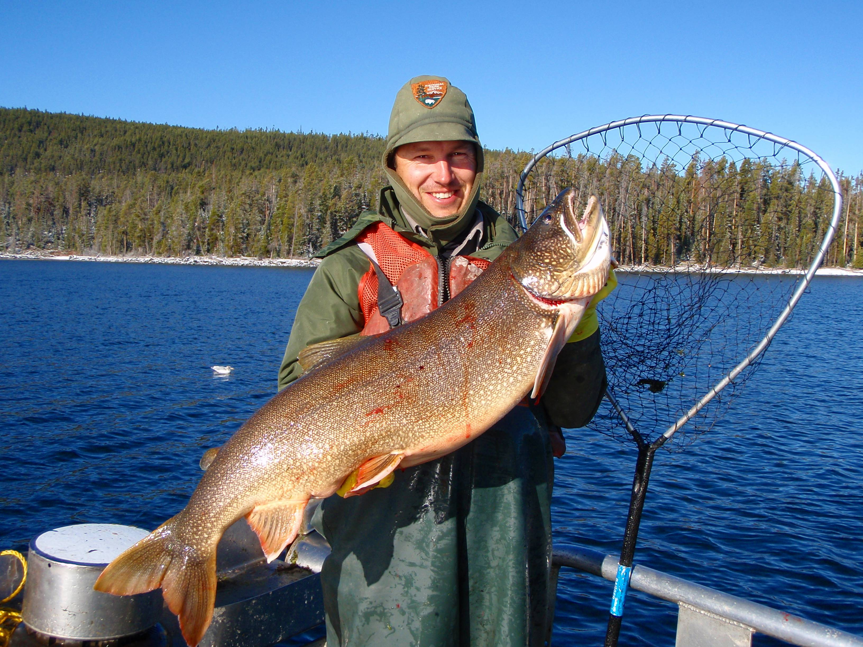 Philip Doepke, a fisheries biologist at Yellowstone National Park, holds a netted lake trout caught from Yellowstone Lake in Wyoming. Scientists say the voracious species of trout that entered Yellowstone Lake and decimated its native trout population appears to be in decline.
