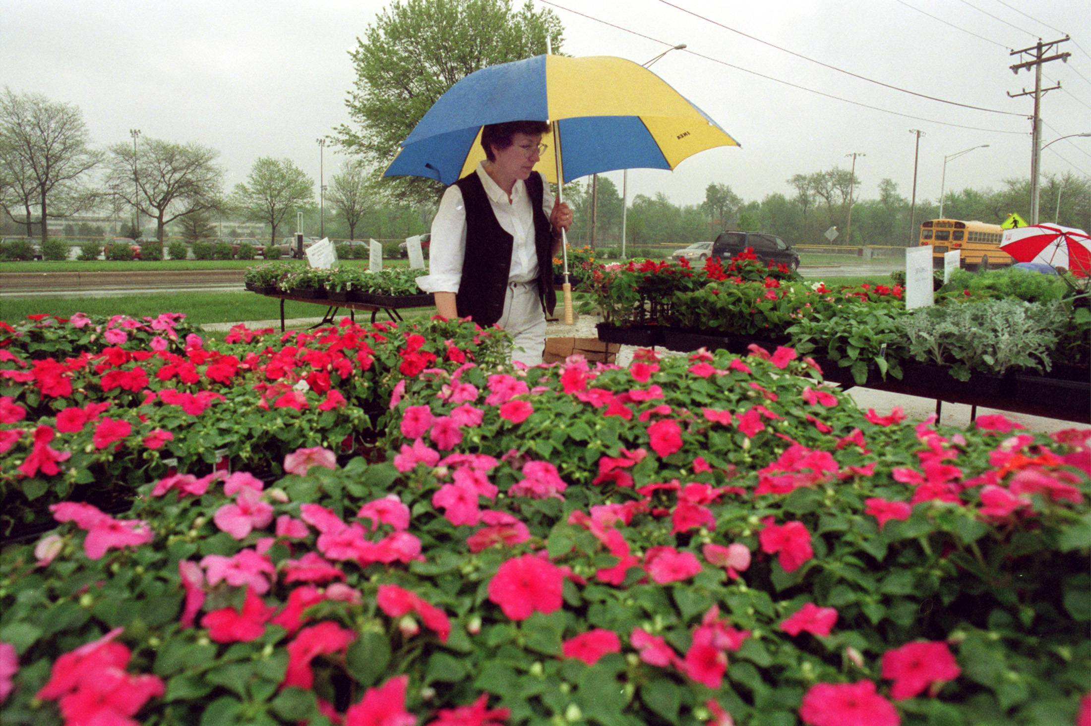 Rain or shine, flowers will be for sale at the Naperville Community Gardeners annual plant sale from 7:30 a.m. to 12:30 p.m. Saturday at the garden plots on West Street, near Martin Avenue. The plant sale is one of several events going on in or near downtown Naperville throughout Saturday.