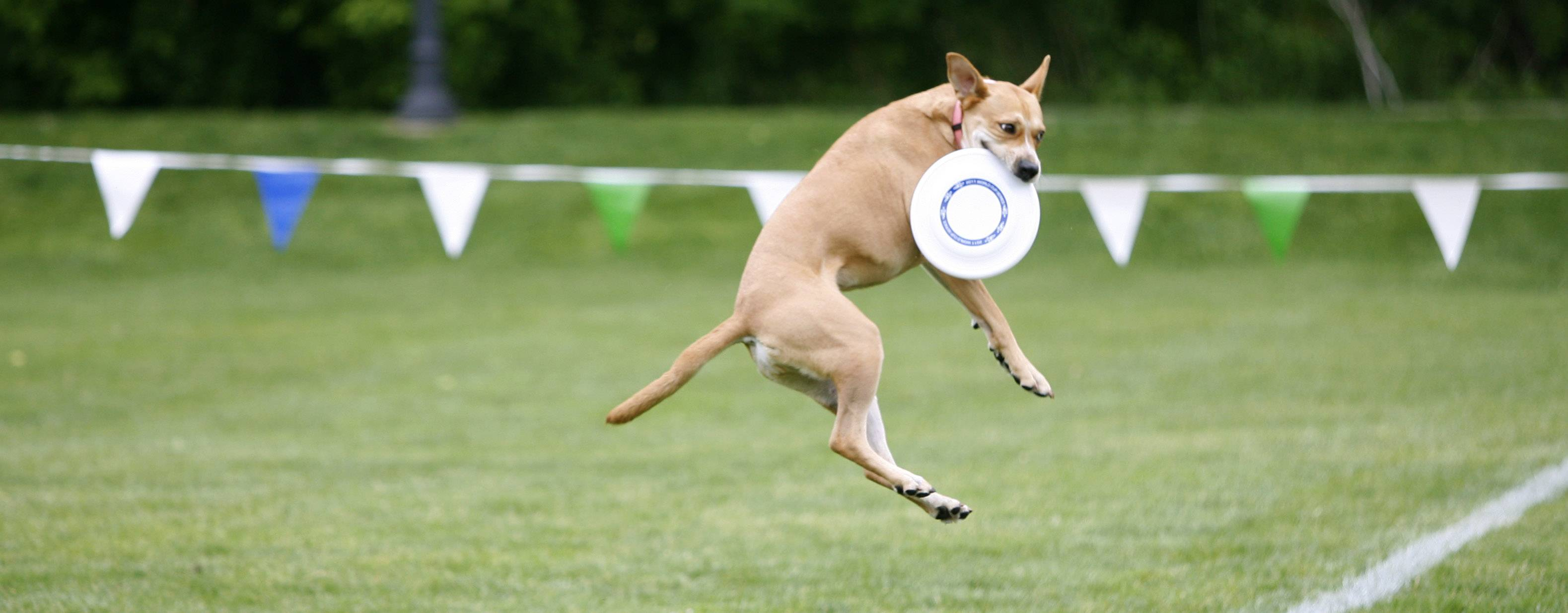 The Dog Disc Championships sponsored by Windy City K-9 Club is just one of several outdoor activities on Saturday in or near downtown Naperville.