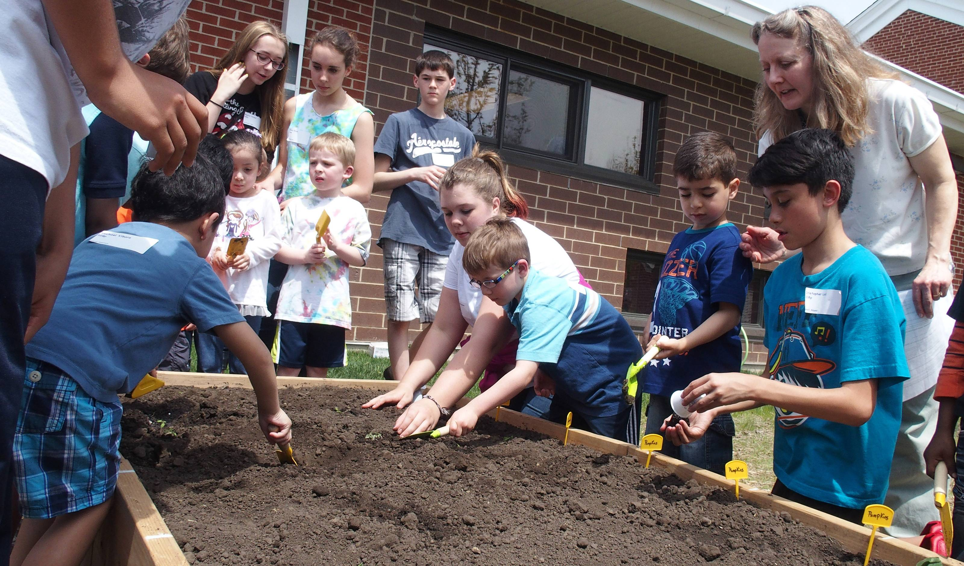 Preschool students from Carol Stream Elementary District 93's Early Childhood Center work with eighth-graders from Stratford Middle School Thursday to plant class-grown seedlings in the Early Childhood Center's new community garden.
