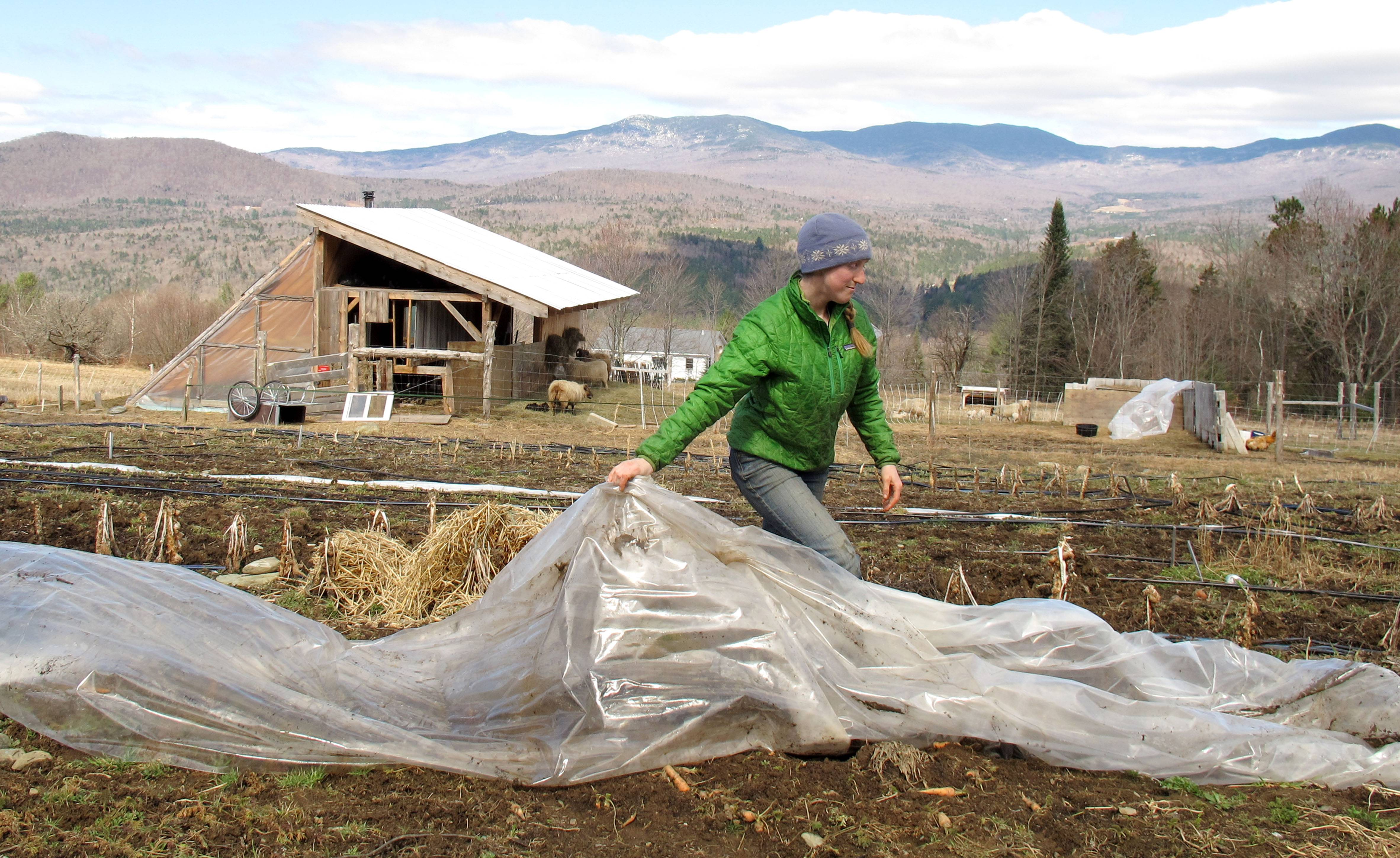 Katie Spring rolls up plastic that was used to cover certain plants during the winter in a field at the Good Heart Farmstead in Worcester, Vt. Spring and her husband Edge Fuentes, who both own the farm, back the GMO labeling bill passed by the Vermont legislature.
