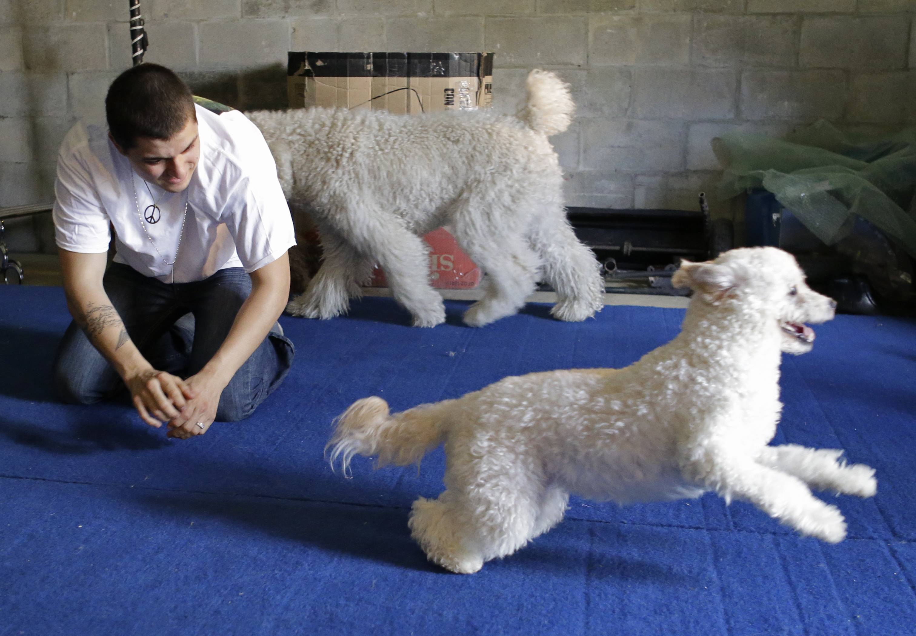 Nicholas Olate plays with dogs Toby, front, and Oso, back, after a training session in Sorrento, Fla. The Olates spend more than 11 months a year on the road performing.