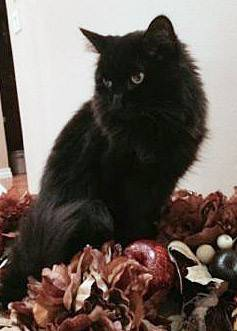 Sonny, the late cat of Polly Volkman of Sugar Grove, was a gift from her first husband shortly before he died of cancer 10 years ago.