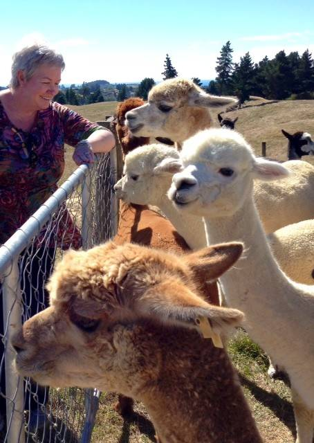 Rae Martin, co-owner of Naperville-based Russell Martin Carpet & Rugs, watches some Alpacas during a recent trip to New Zealand with her husband Dave Martin. They visited some farms to see how wool is sheered, gathered and selected for wool that goes into rugs and carpets sold in the United States.