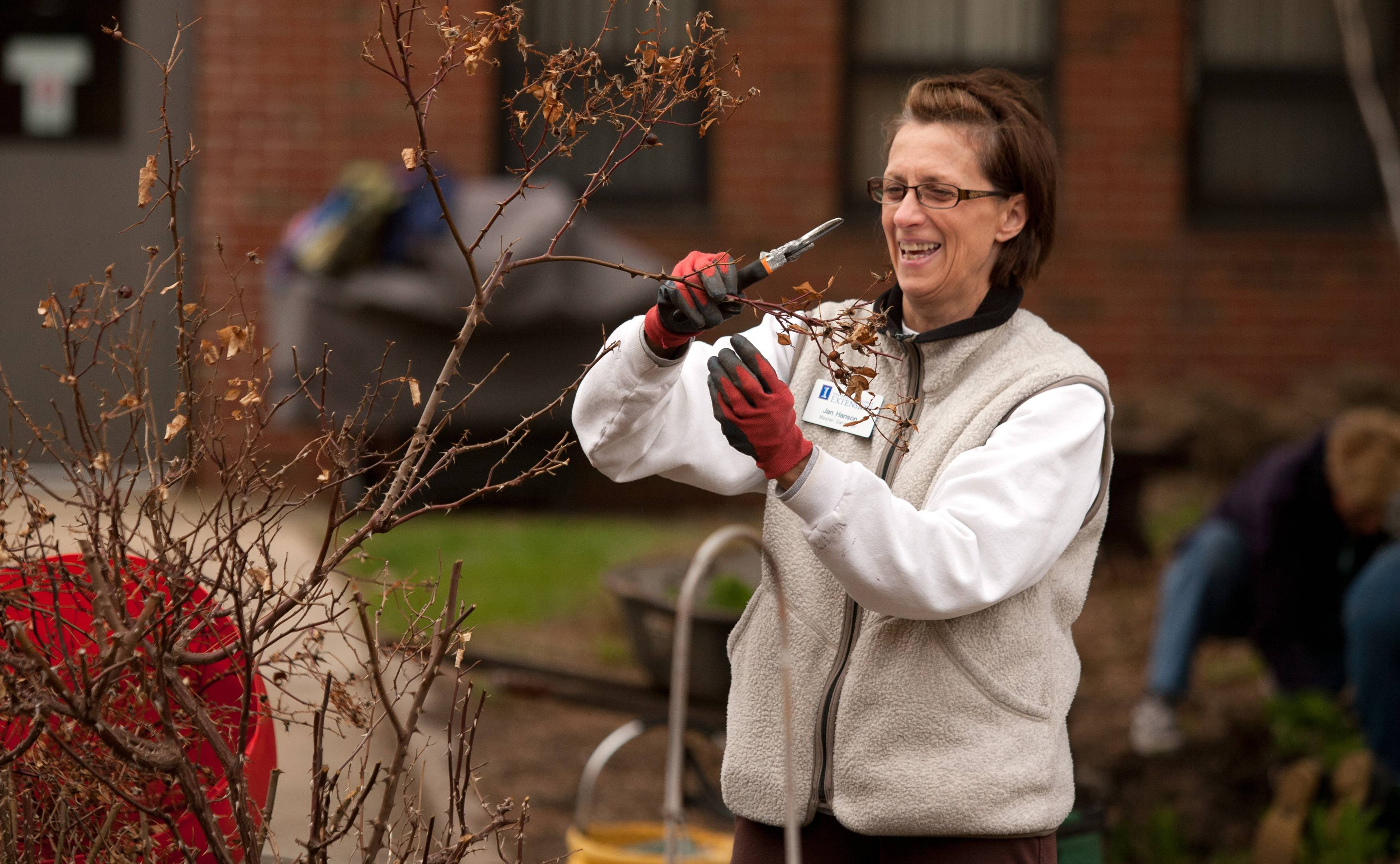 Jan Hanson, of Bartlett, along with other University of Illinois Master Gardeners, prepares garden beds at the DuPage Convalescent Center. She is pruning Knock Out roses.