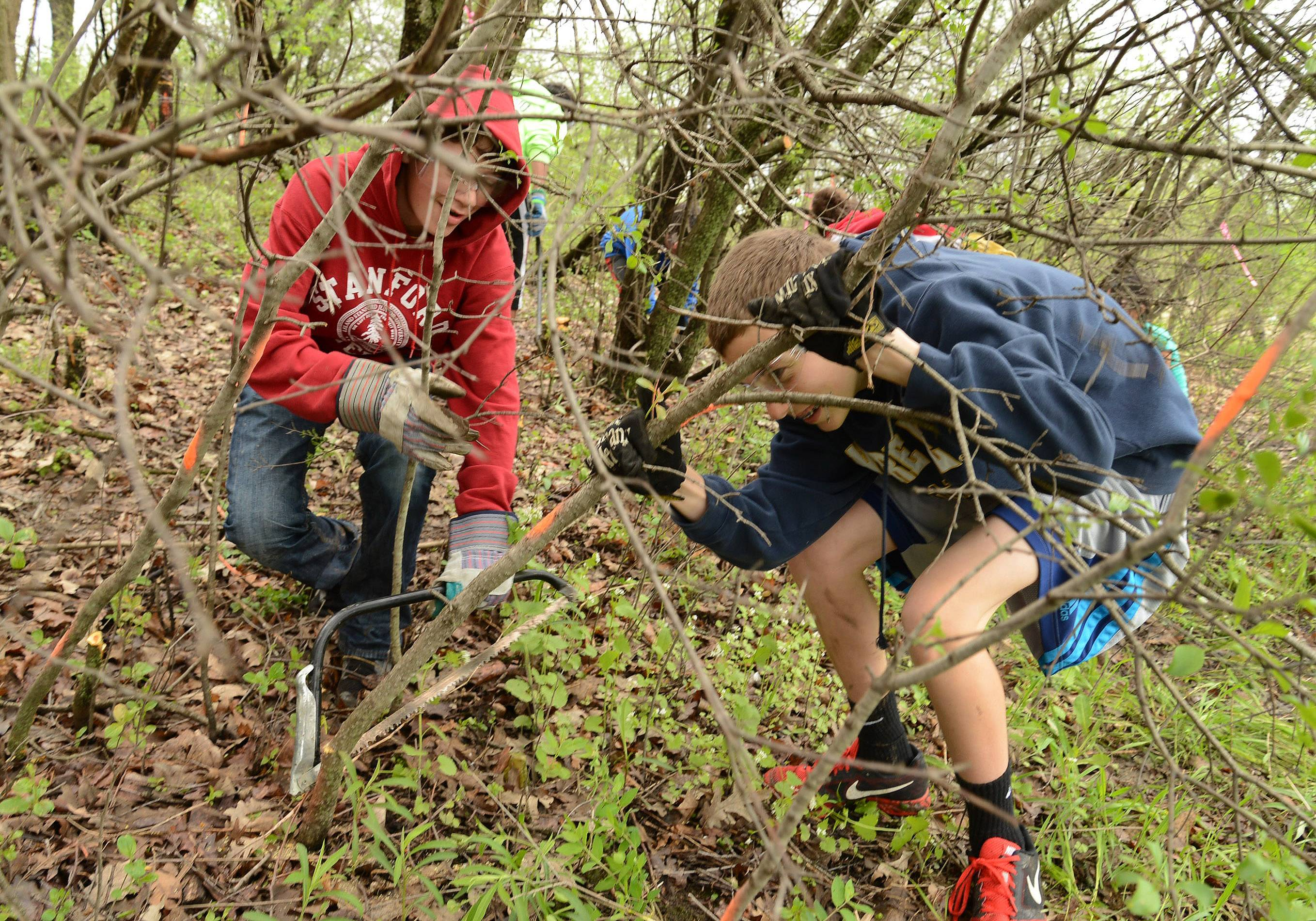Justin Winters, left, and Nolan Feeney hack away at European buckthorn in the Ray Lake Farms Forest behind their school Tuesday.