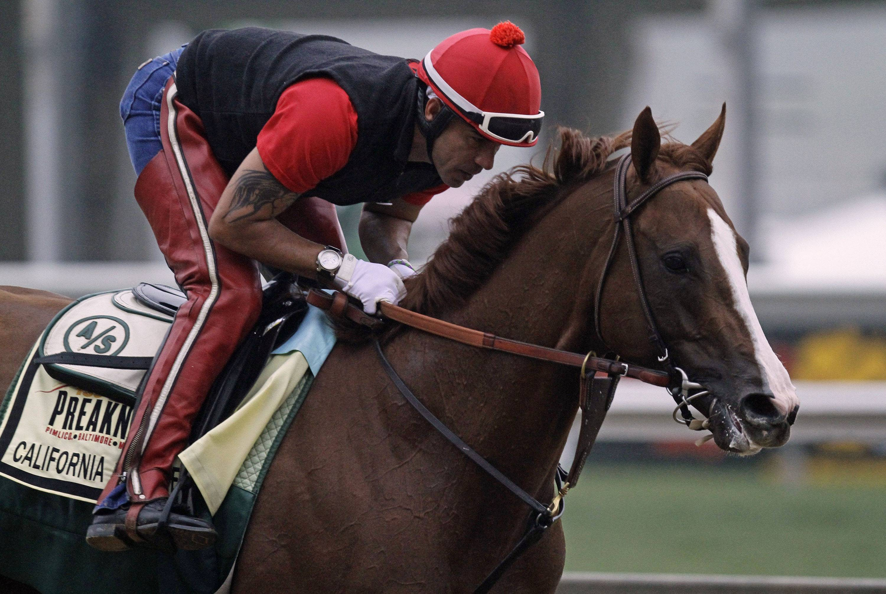 Exercise rider Willie Delgado gallops Kentucky Derby winner California Chrome at Pimlico Race Course in Baltimore, Md., Wednesday, May 14, 2014. The Preakness Stakes horse race is scheduled for May 17 at Pimlico.