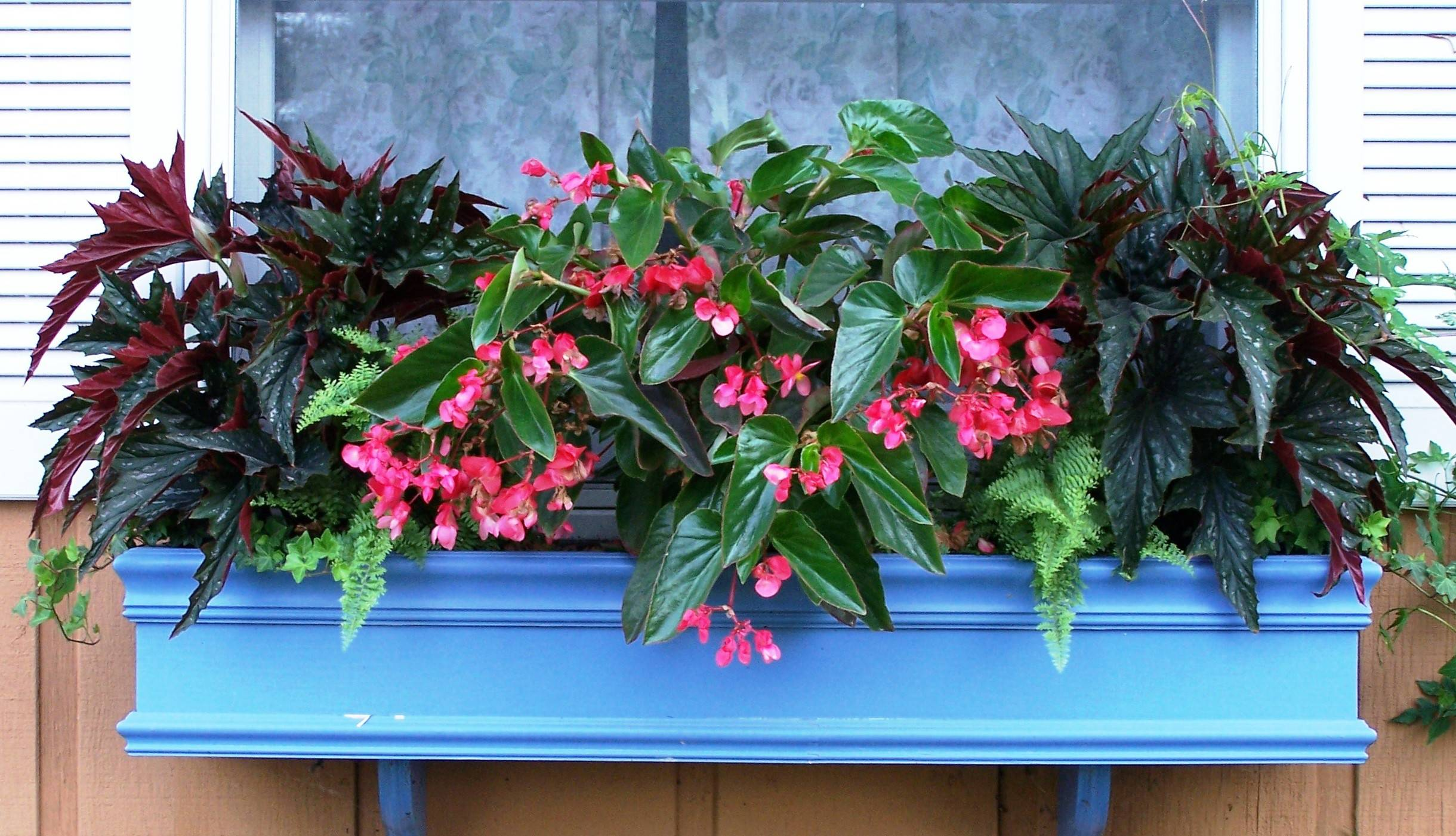 Colorful Plants For Shade