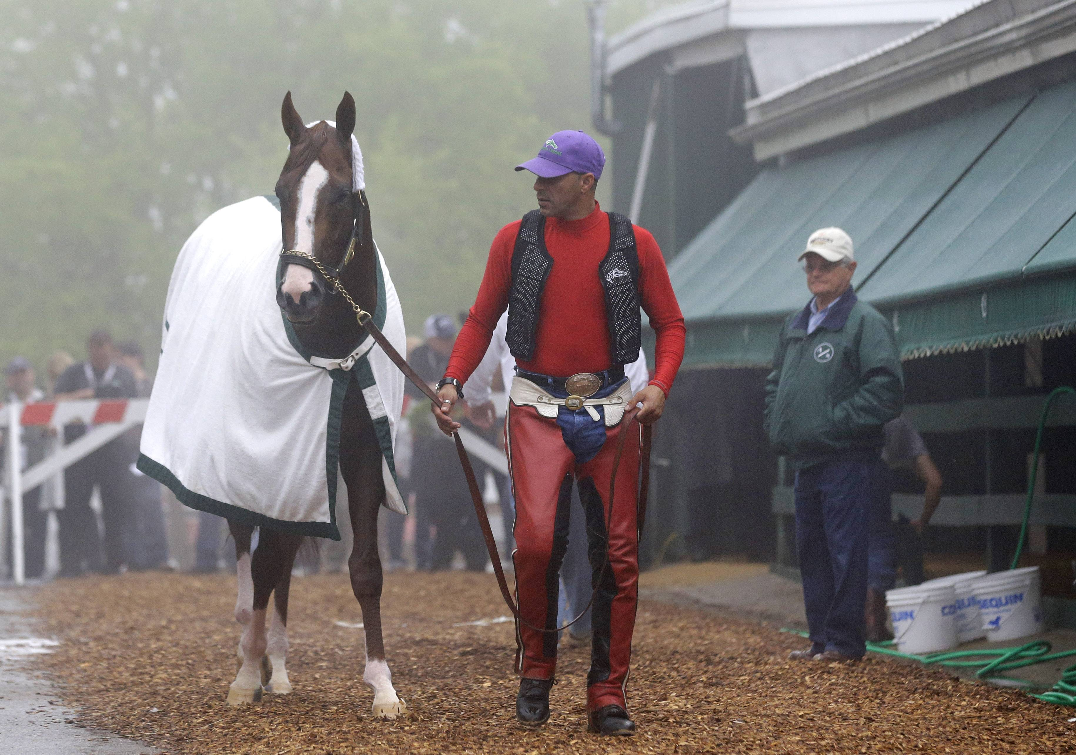 Kentucky Derby winner California Chrome heads to his stable after workout Thursday at Pimlico Race Course in Baltimore. The colt is favored to win The Preakness Stakes on Saturday.