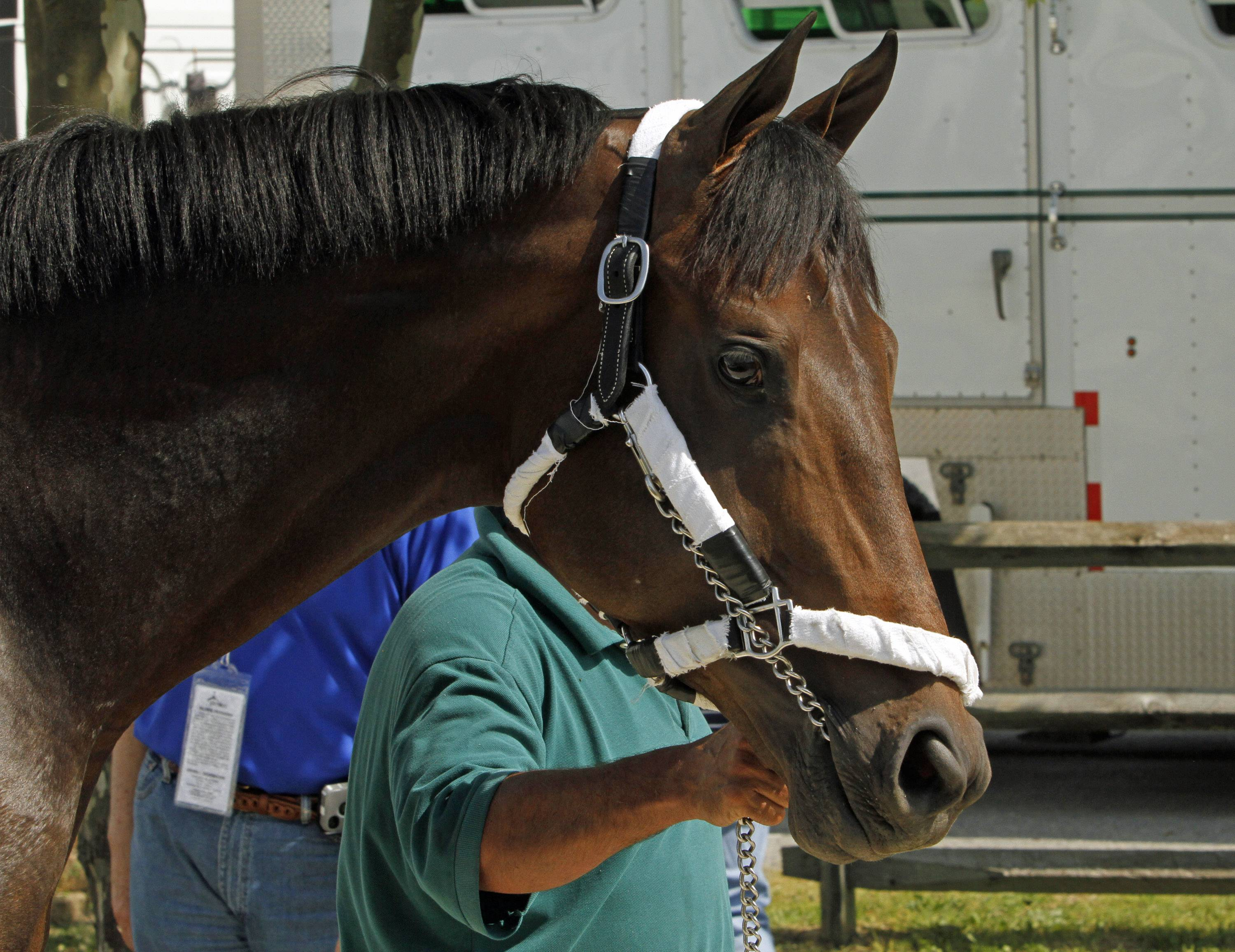 Preakness Stakes hopeful General a Rod finished 11th in the crowded Kentucky Derby field two weeks ago.