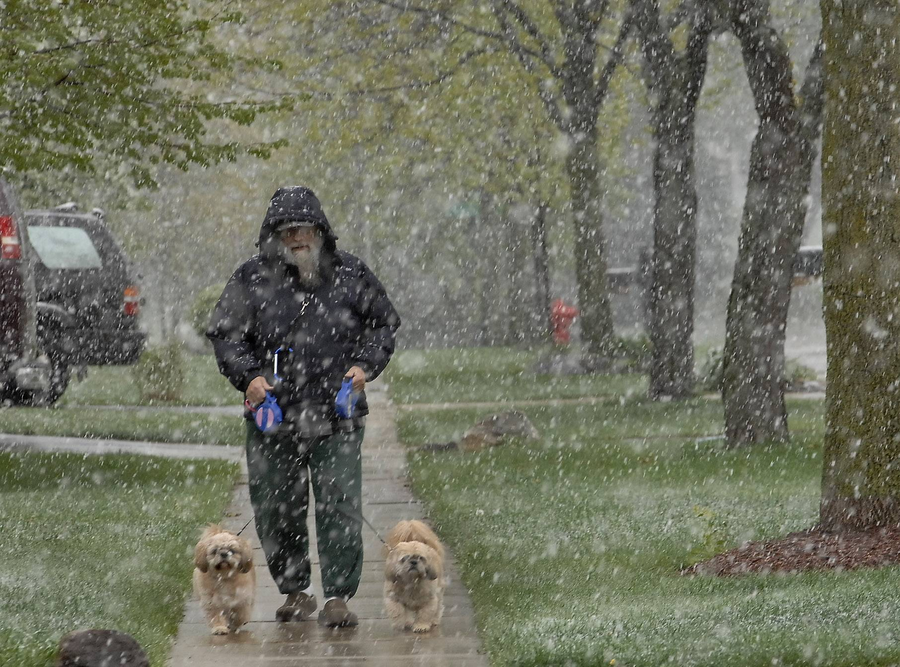 "Richard Nowinski walks his two dogs Archie and Cartman in the snow along Terrace Drive in Algonquin Friday morning. ""The dogs love it, but I don't, not in May,"" said Nowinski."