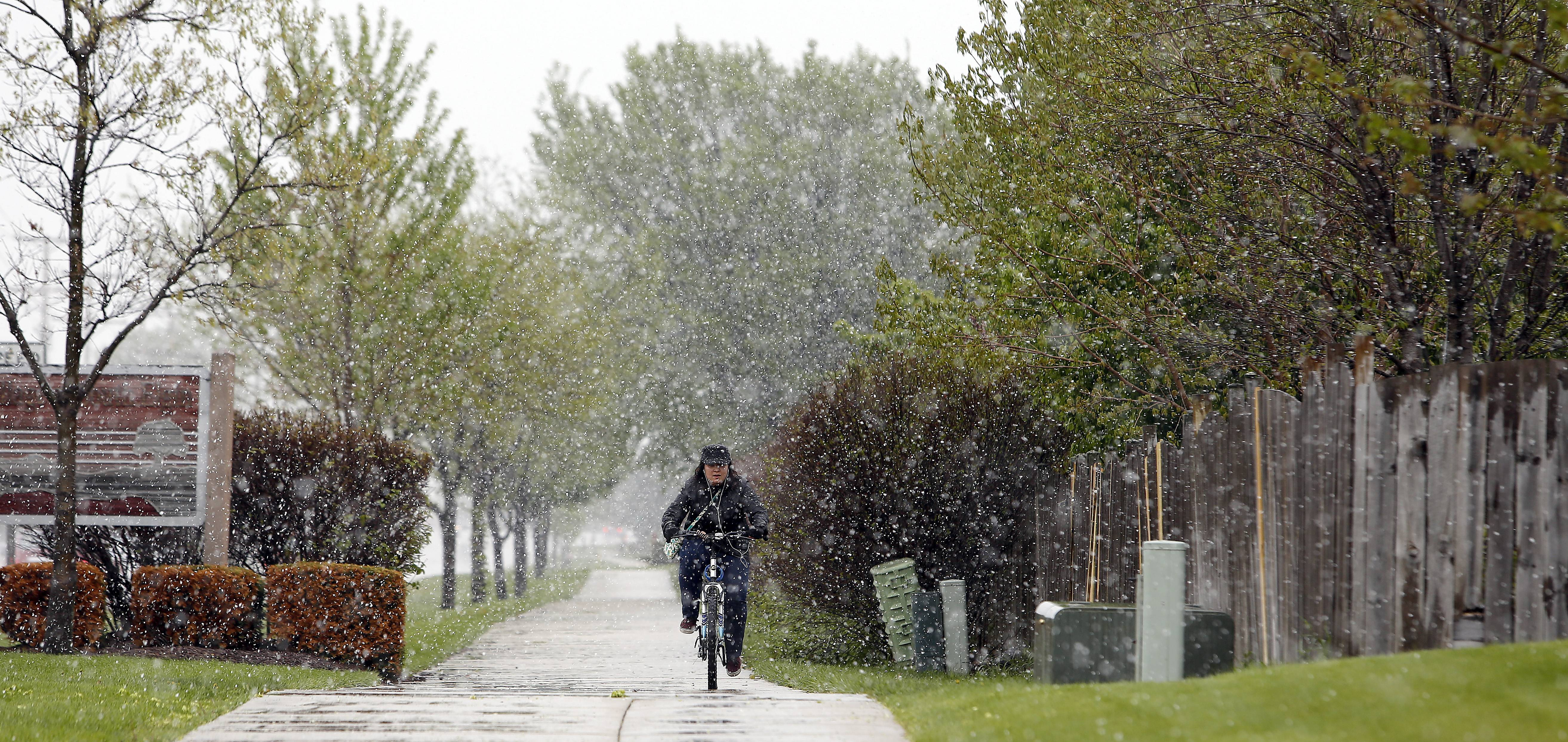 "Alina Bagamanova of South Elgin cycles through spring snow showers along Hopps Road in South Elgin as she heads to work in South Elgin Friday. ""I am a winter person, I love it, and I need to go to work"" Bagamanova said of the snow. ""I'm prepared for it."""