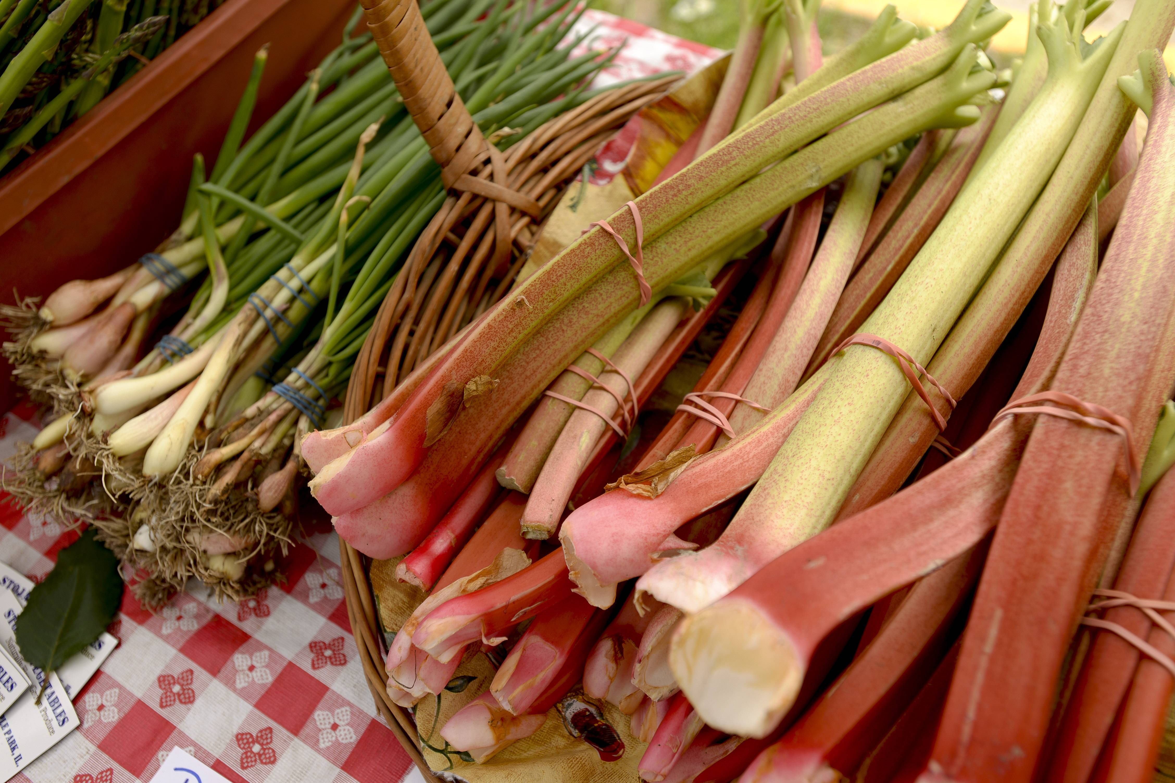 Onions and rhubarb are some of the vegetables available this early in the season at the East Dundee farmers market.