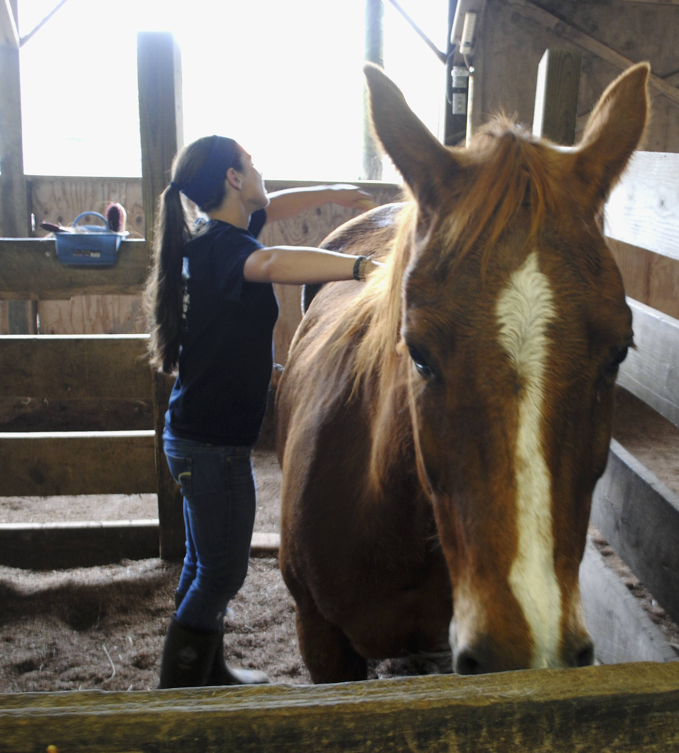 Peggy Nott, an equine sciences student at Southern Illinois University interning at Giant City Stables in Makanda, brushes Tootsie. The stables provide specialized equine services and therapeutic riding for the physically disabled.