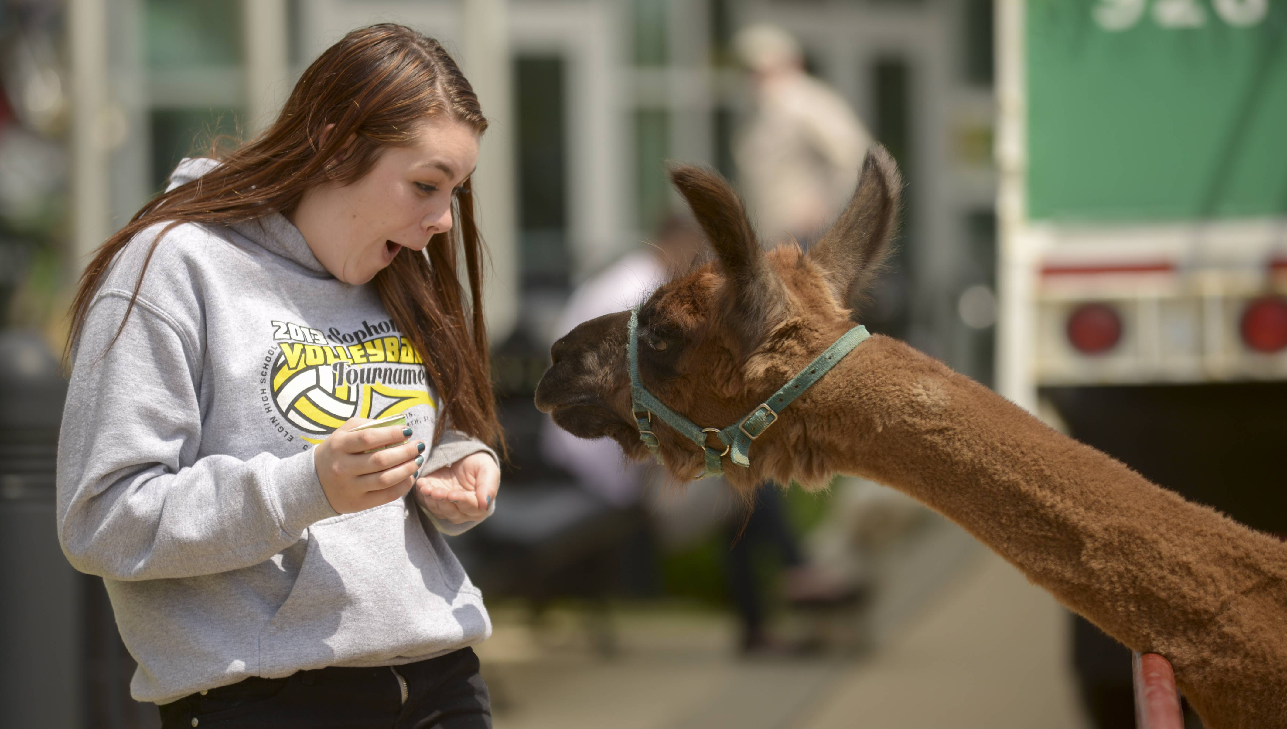 Taylor Gillen, 16, of Elgin, gives a funny look back to the lama in search of a snack at the Elgin Green Expo at the Centre of Elgin, Saturday. The lama and other petting zoo farm animals were on display by Santa's Village Azoosment Park in East Dundee.