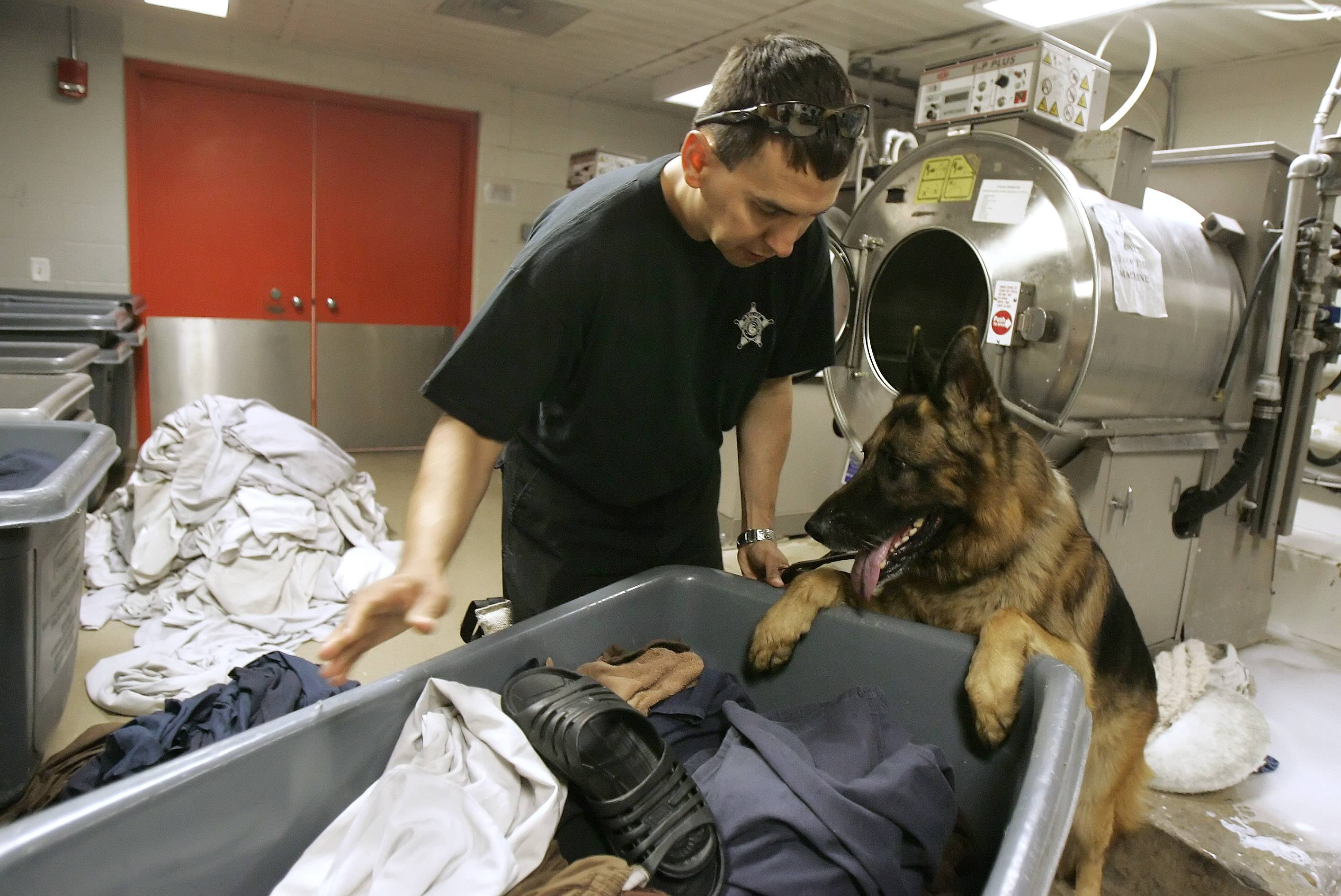 Gurnee police dog Shane, a German shepherd, handled many calls in his eight years with the department. Here handler Officer Philip Mazur is with Shane to search a laundry room for surprise drug and weapons sweep at the Lake County jail.
