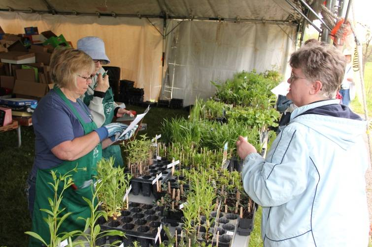A variety of plants will be available at the 25th Annual Bargain Bulb & Plant Sale.Schaumburg Park District