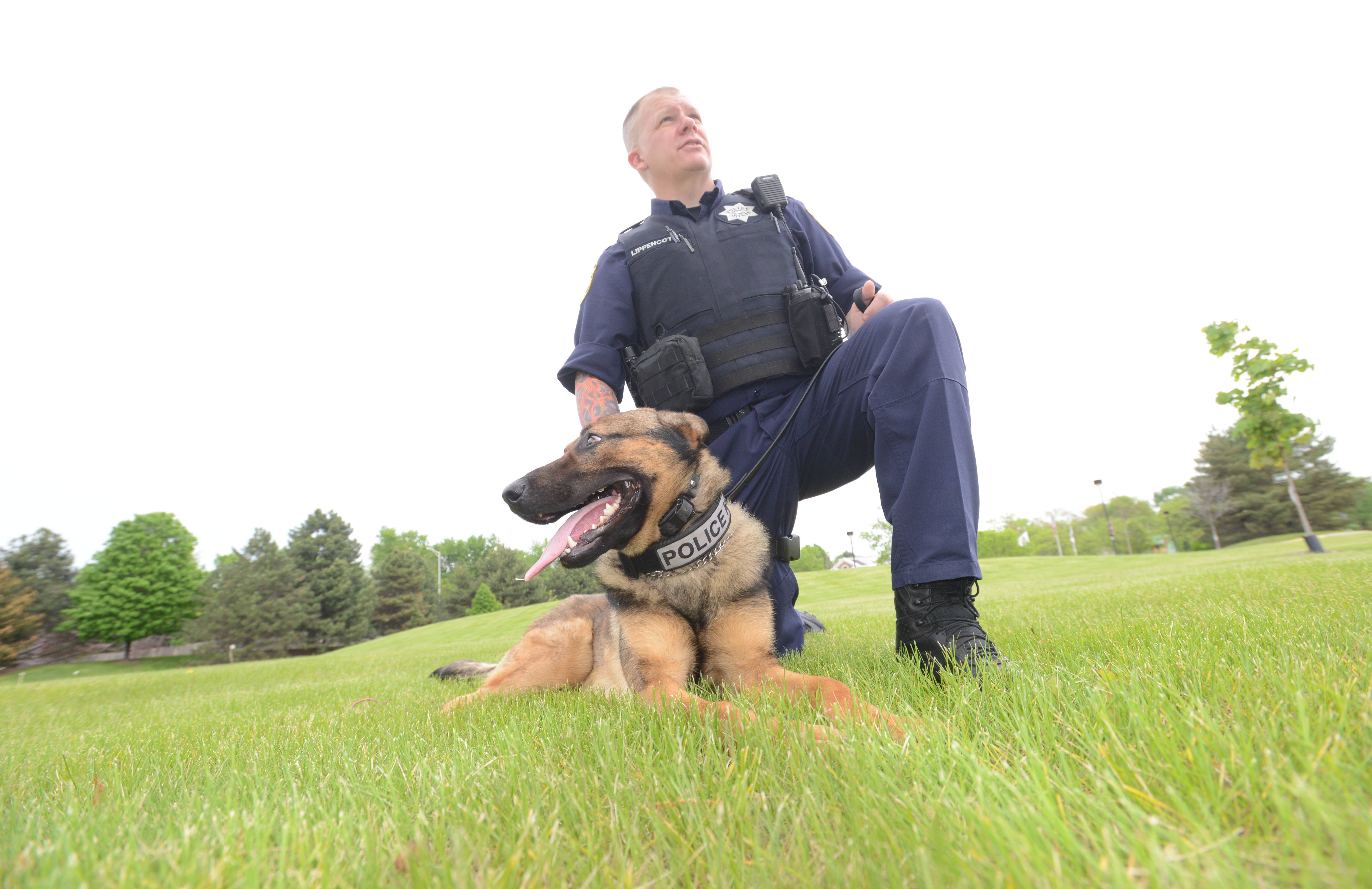 Naperville police officer Grif Lippencott and his partner, Maximus, make up the department's newest K-9 team. They specialize in searching for drugs, following scents to find people and searching areas for evidence.