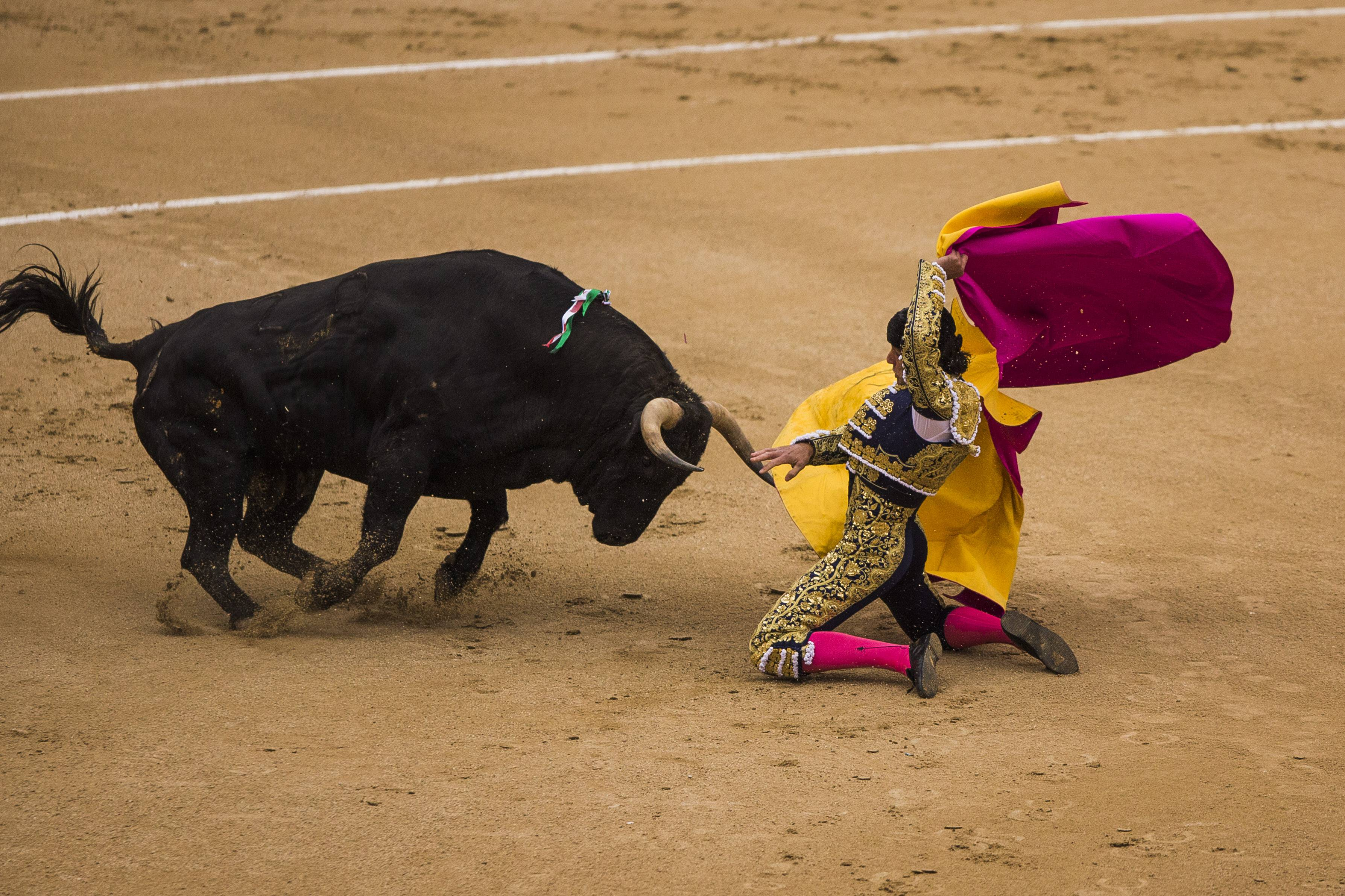 Spanish bullfighter David Mora is tossed by a El Ventorrillo ranch fighting bull during a bullfight at Las Ventas bullring in Madrid, Spain, Tuesday, May 20, 2014. Mora was still being treated in a Madrid hospital Wednesday but was said to be out of danger.