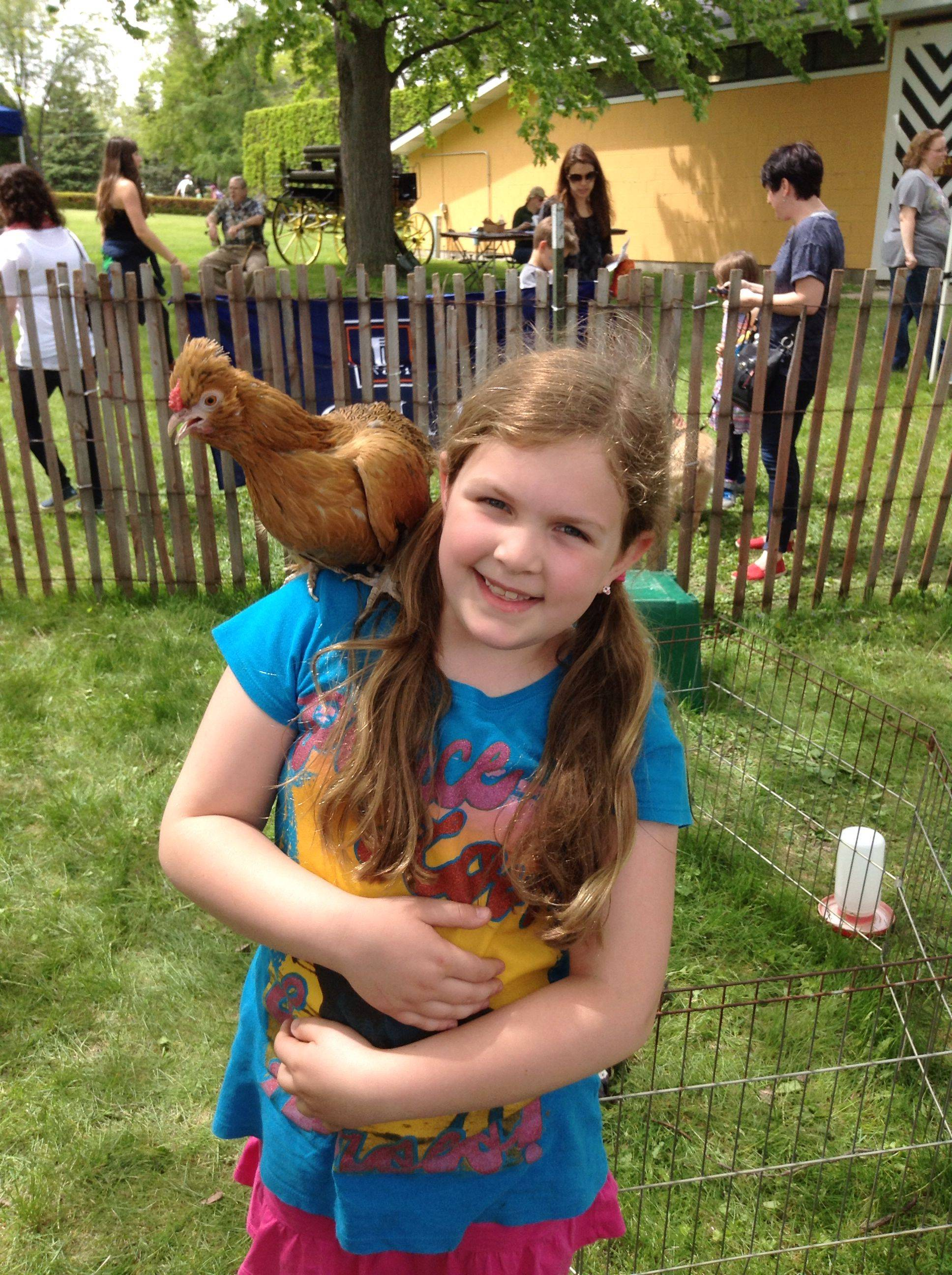Comfortable with a chicken on her shoulder, 8-year-old Kate Vallaro of West Chicago is used to the birds because of her participation in the Just Say Nay 4-H Club, which meets in Wheaton.
