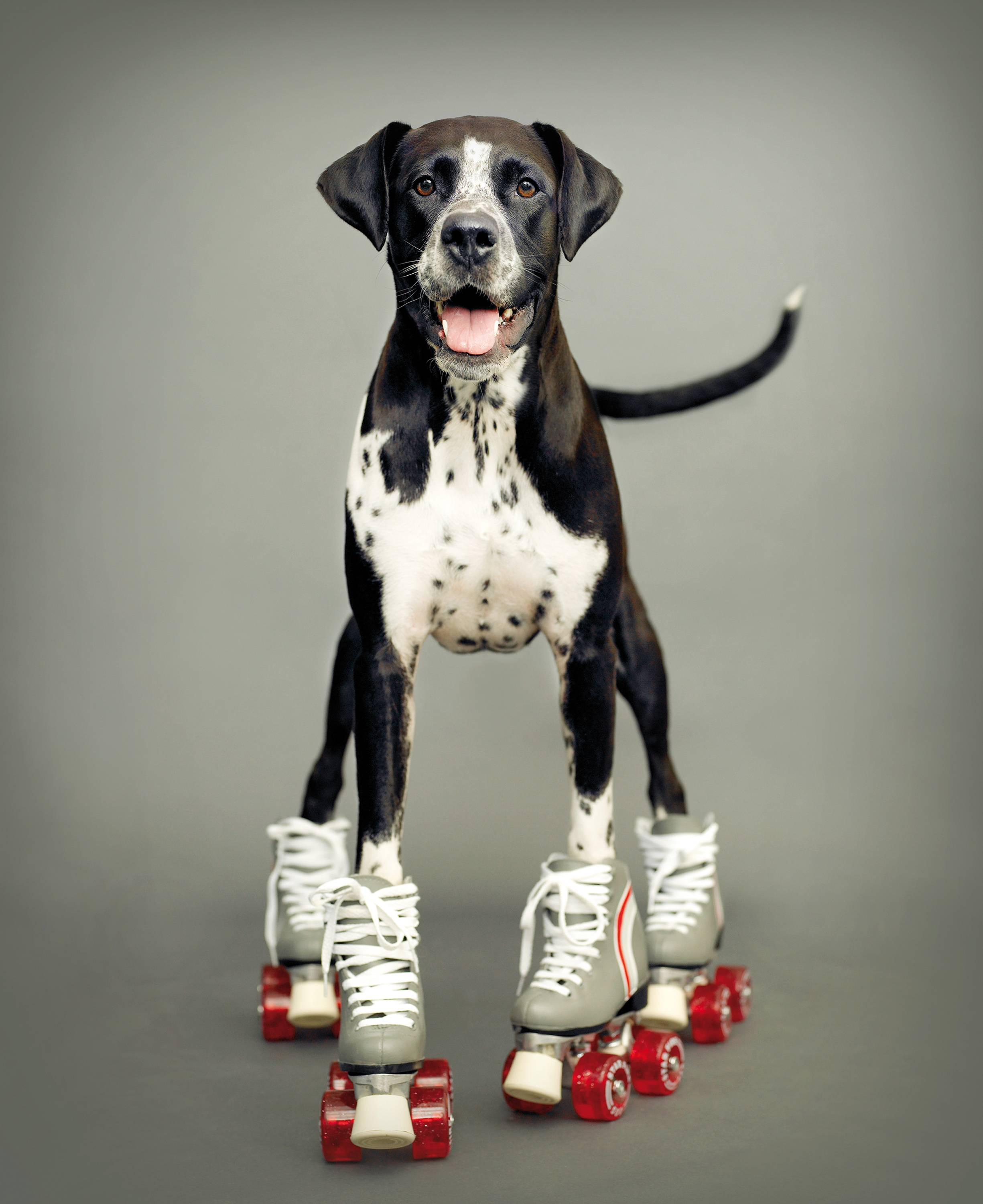 This Sept, 13, 2007 photo provided by pet photographer Rachael Hale McKenna shows one of her 'clients,' Kizzie a 6-year-old boxer-Dalmatian mix, in a commissioned portrait taken in New Zealand.