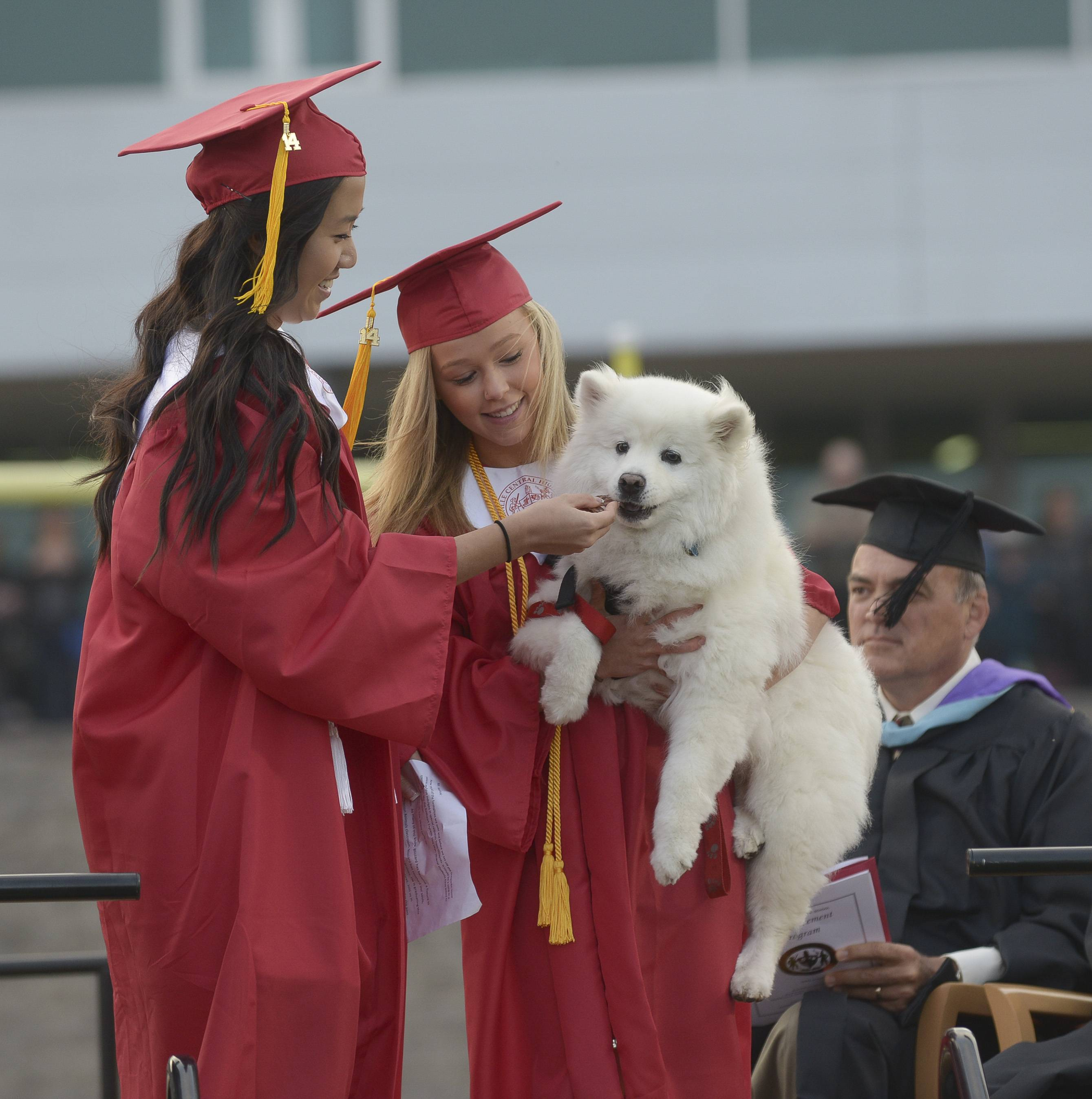"Kasey Zhou and Tess Golding bring ""Blizzard"" to the stage to give the dog  special recognition for being part of the  Companion Animals Class at Naperville Central.  The dog was also ""graduating"" since their human handler, teacher Craig Theimer is retiring."