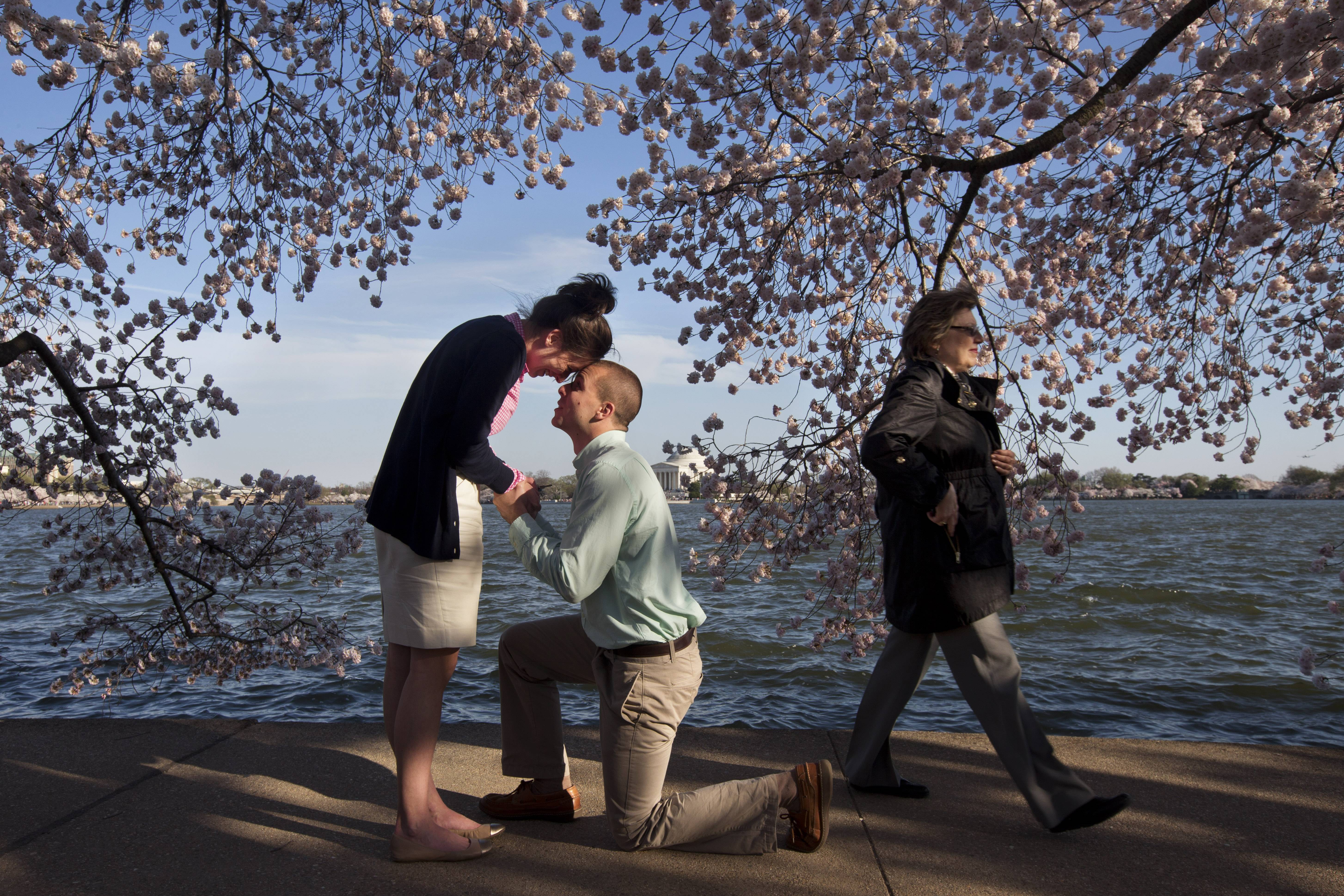 Steven Paska, 26, center, of Arlington, Va., asks his girlfriend of two years, Jessica Deegan, 27, to marry him as cherry blossom trees in peak bloom line the tidal basin with the Jefferson Memorial in the background in Washington. Deegan said yes to the surprise marriage proposal. When it comes to dating, Americans' attitudes toward money and gender roles hew to the traditional and sometimes conflict.