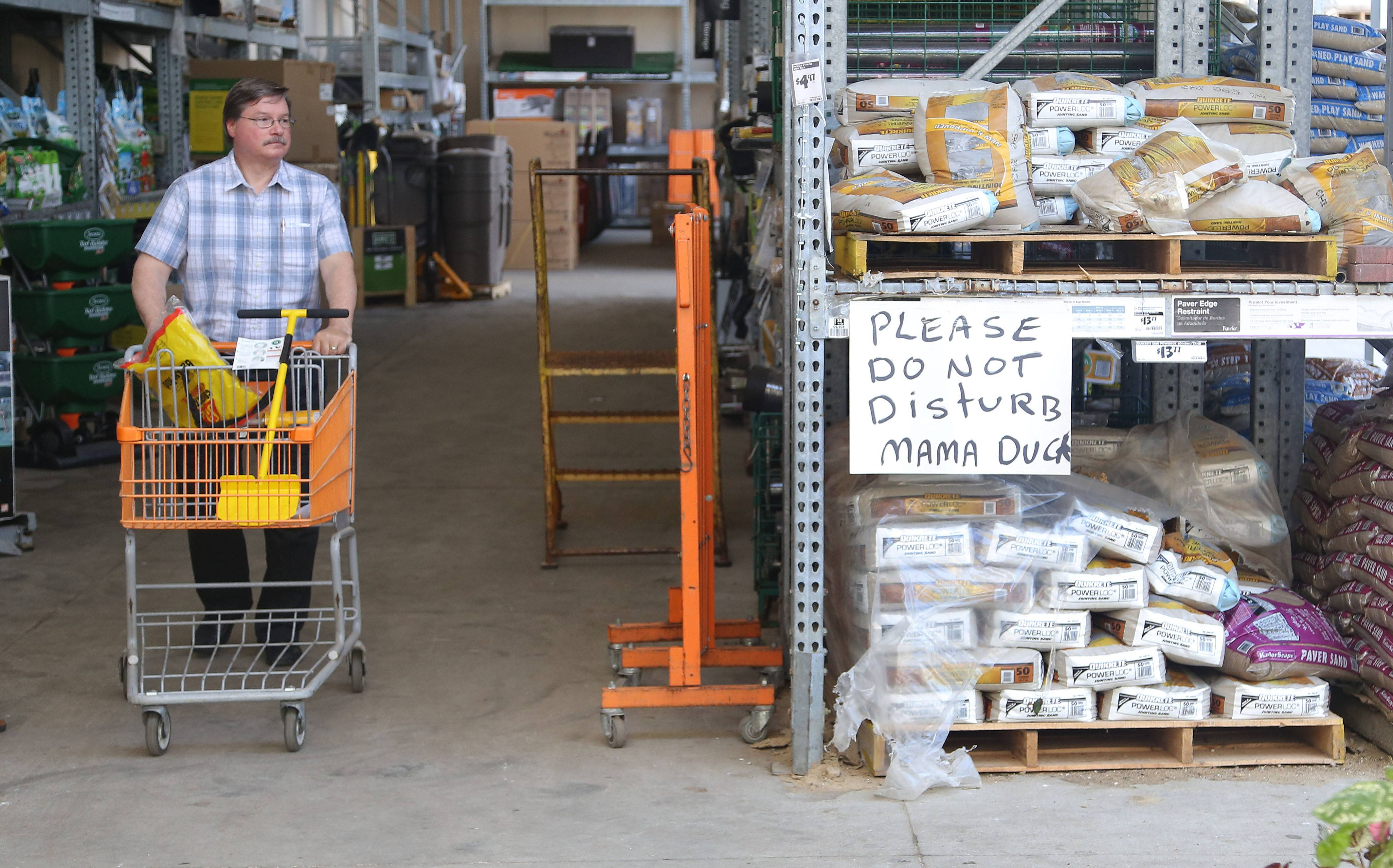 A Gurnee Home Depot shopper passes a section of the garden department where a mother duck laid her eggs in a pallet of paver block sand bags. Employees have put up a sign to protect her and are feeding her until her ducklings hatch.