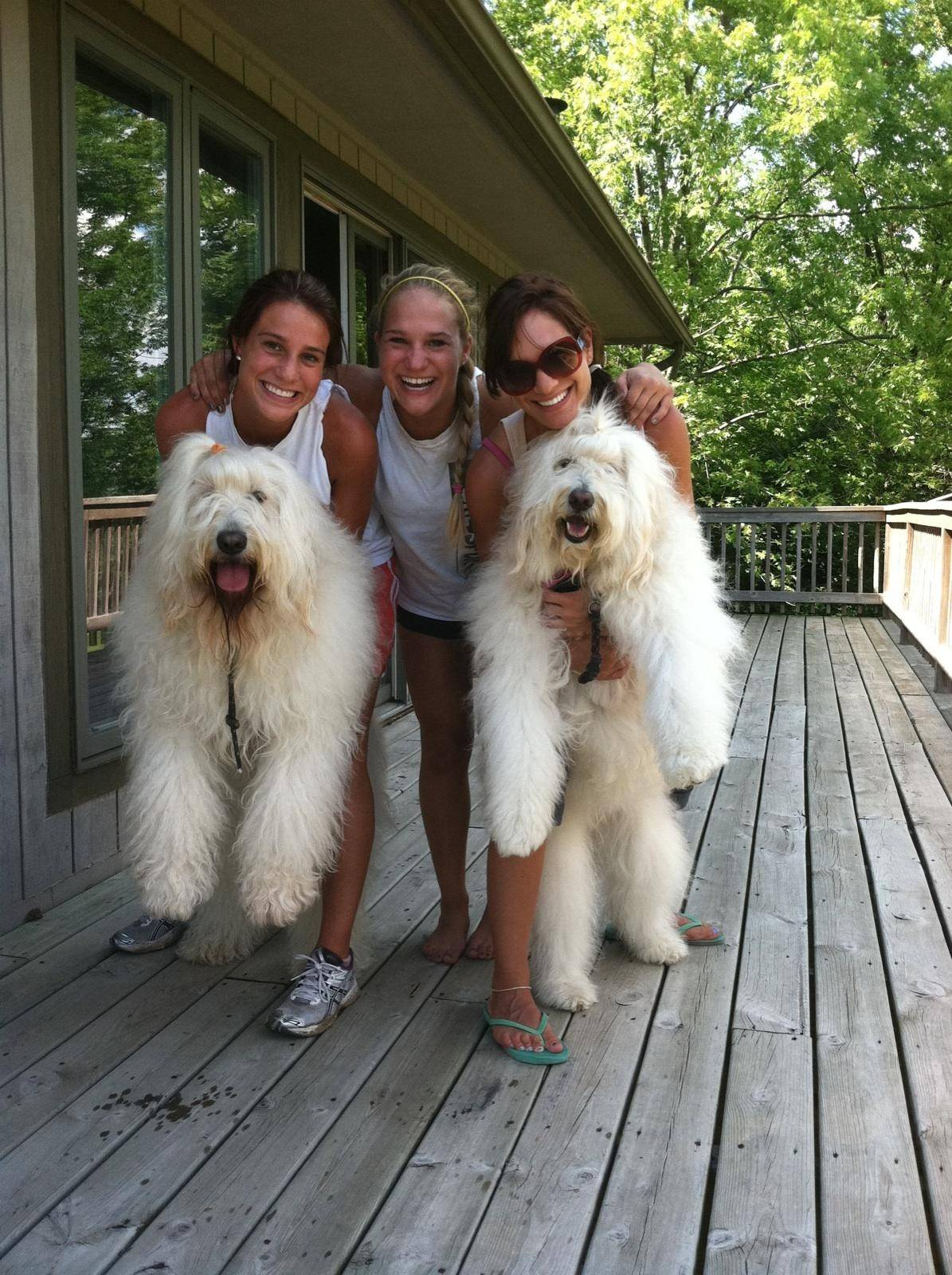 With big smiles and well-behaved dogs, Lucy and Ginger, the Giancola sisters, from left to right, Domenica, Gina and Giovanna enjoy a family vacation in Galena a couple of months before Gina's death in 2011.