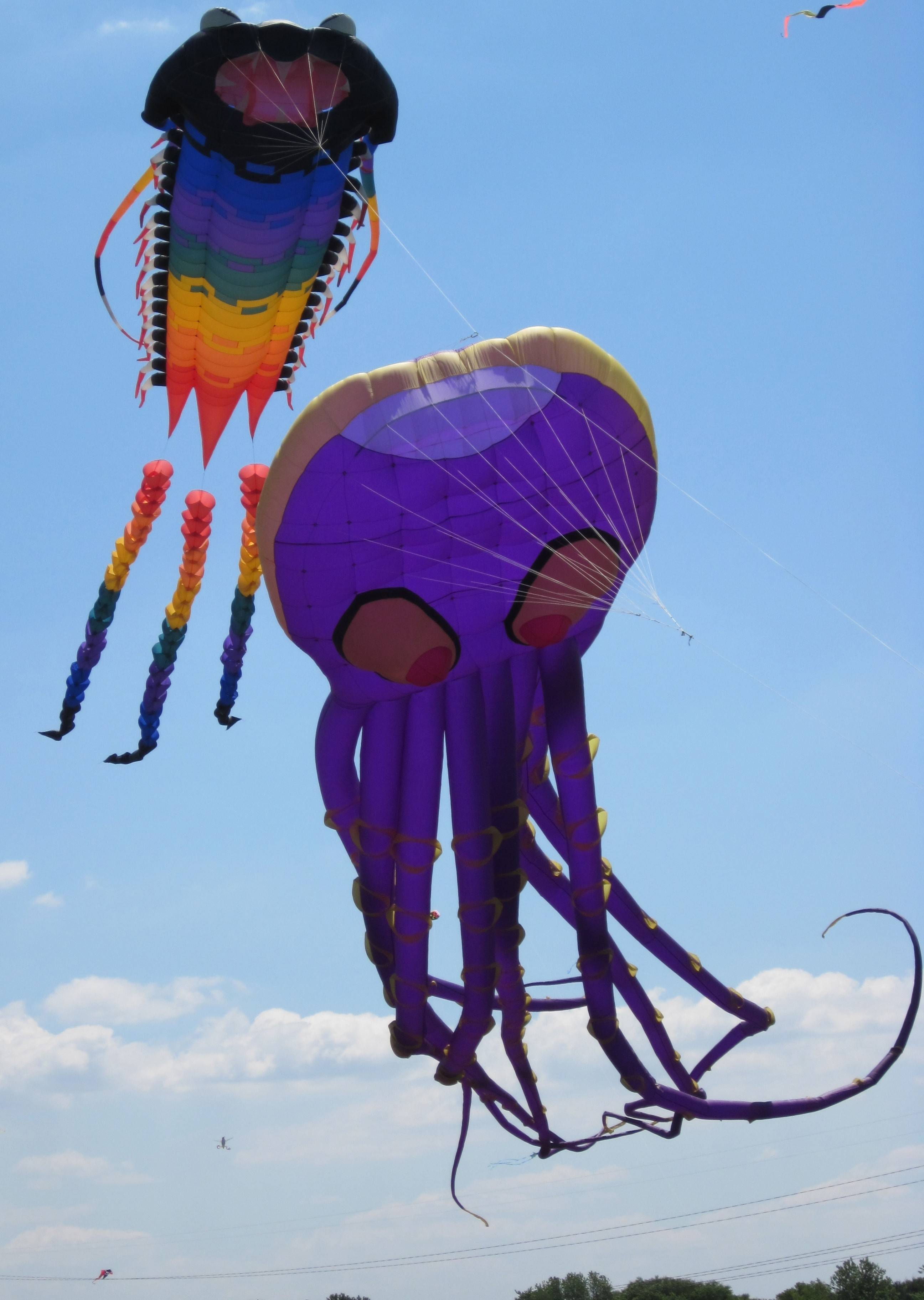 The Naperville Park District is hosting its eighth annual Frontier Kite Fly Festival from 10 a.m. to 4 p.m. Sunday at the Frontier Sports Complex in Naperville, 3380 Cedar Glade Road.