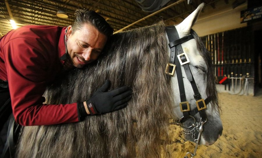 Mario Contreras said he loves his job as the head horse trainer at Medieval Times in Hoffman Estates. He has a special love for the Andalusian stallions that he trains for the shows.
