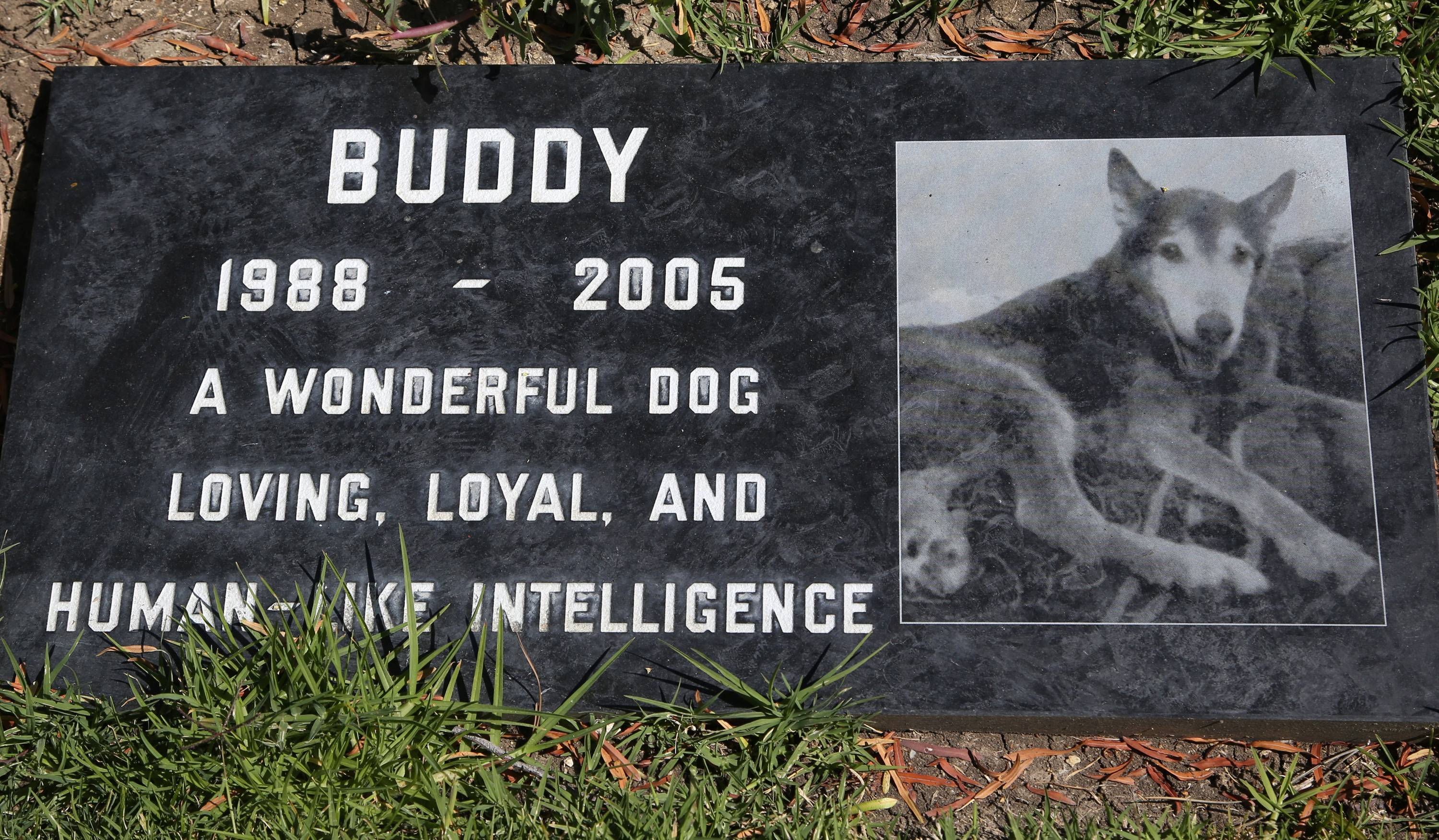 Saying goodbye to a beloved dog or cat is hard. This grave marker for Buddy is how one family memorialized their pet at the Los Angeles Pet Cemetery in Calabasas, Calif.