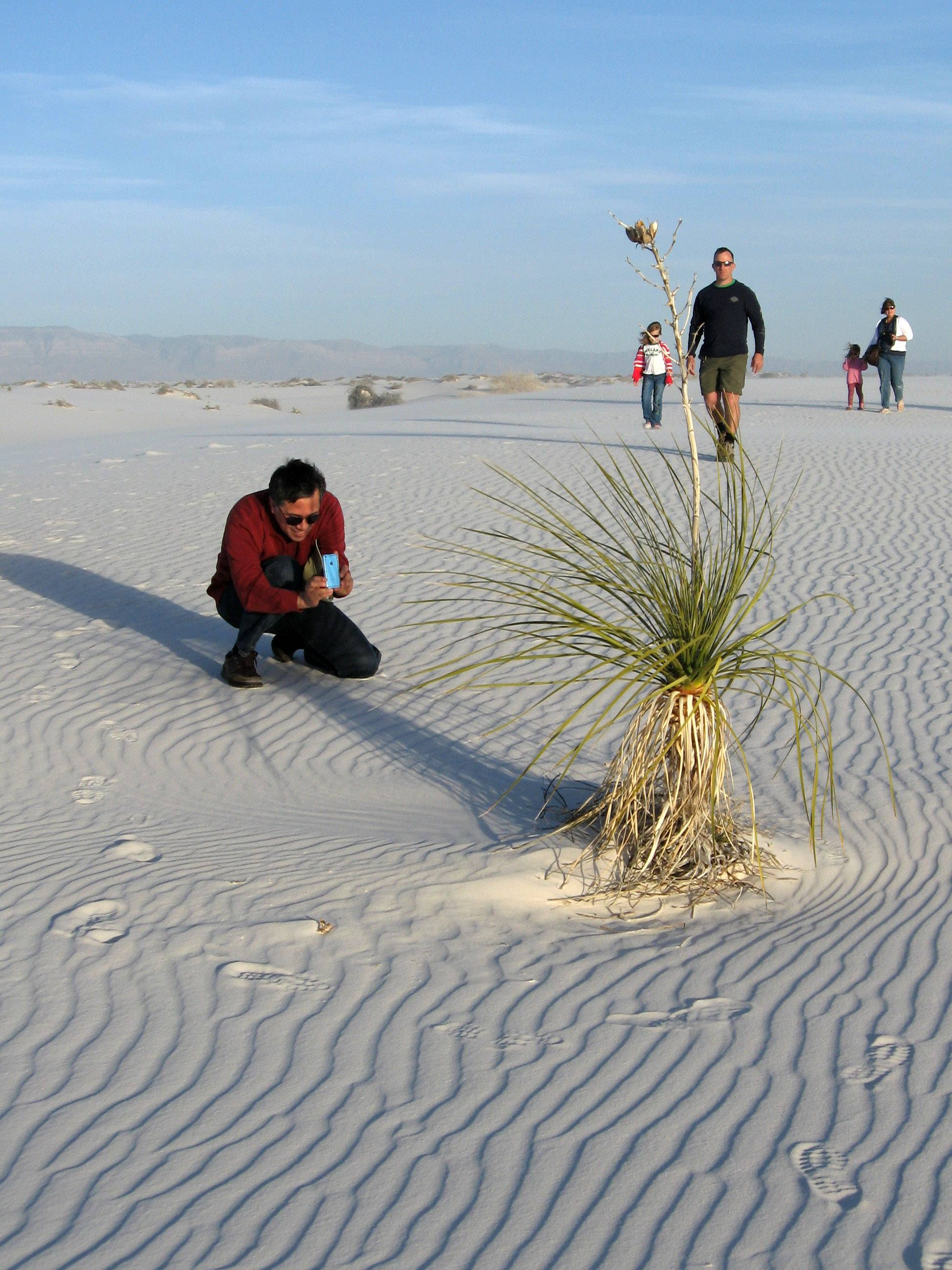 Visitors on a ranger-led hike in White Sands National Monument in New Mexico examine a yucca plant while footprints punctuate the endless white sand desert.