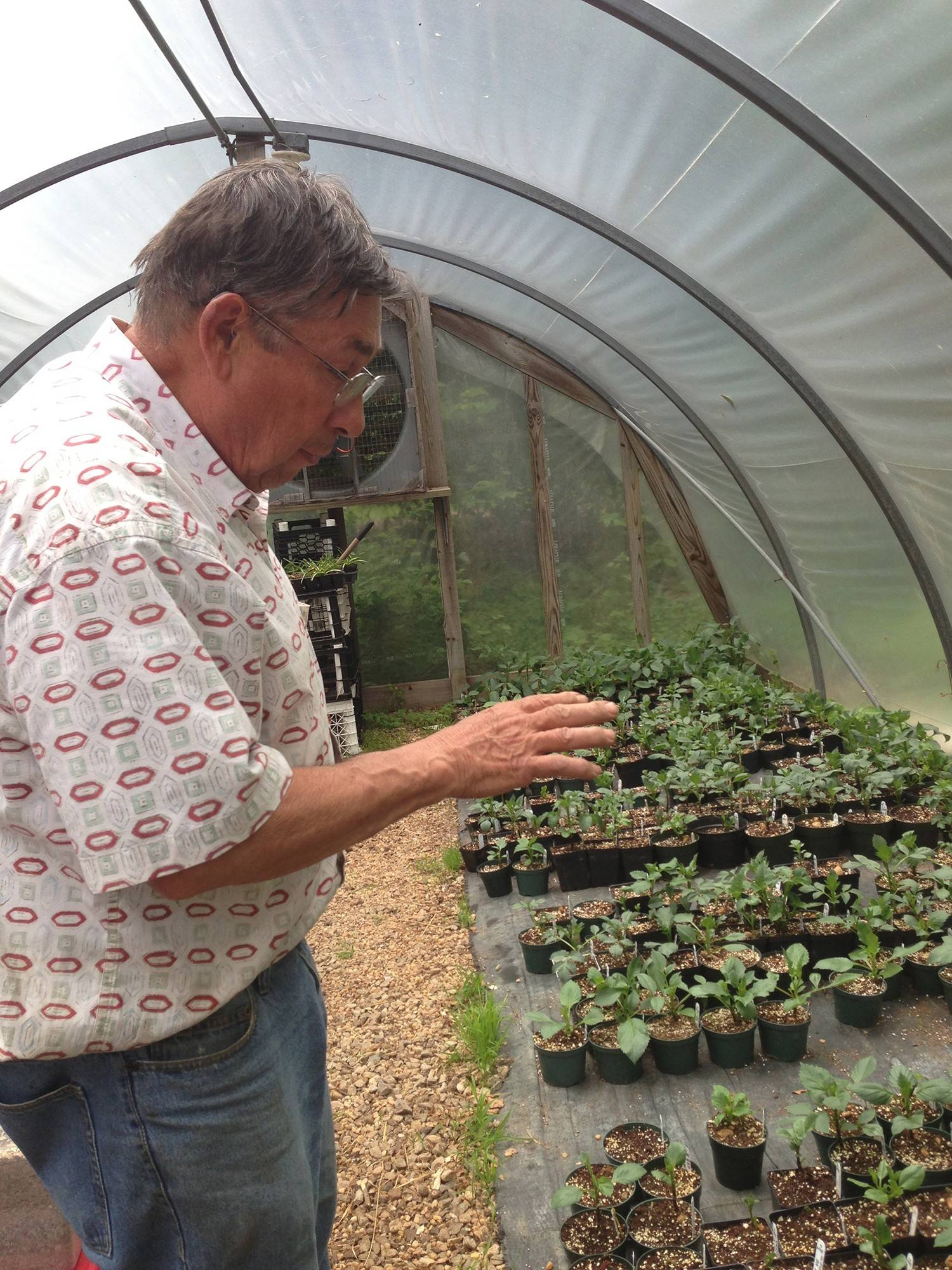 Dahlia grower Nick Weber examines young plants in his greenhouse in Brookeville, Maryland. Dahlias have staged a comeback since falling out of favor over a decade ago.
